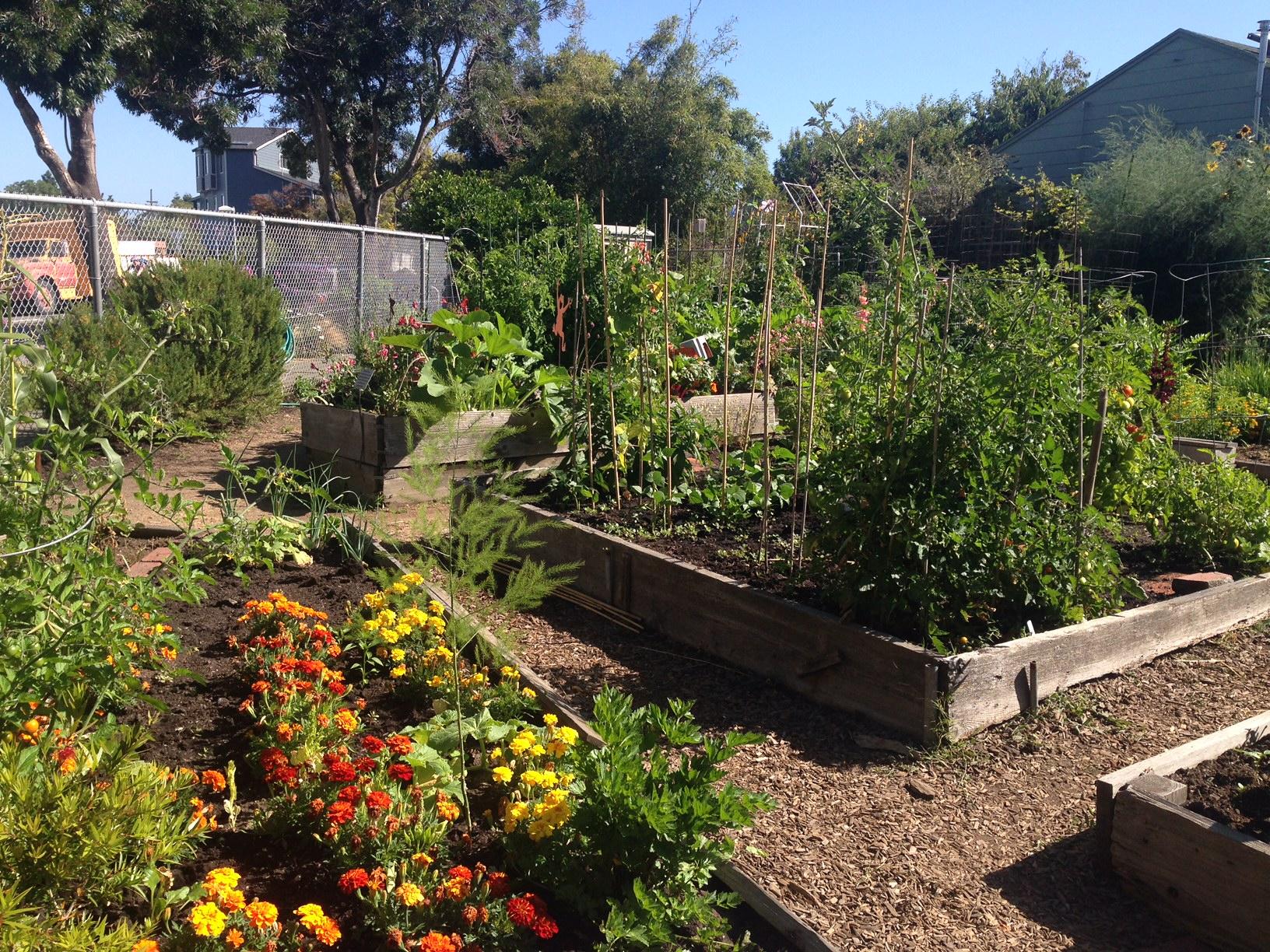 Karl Linn Community Garden is one of dozens of city-subsidized community gardens where residents can grow food.