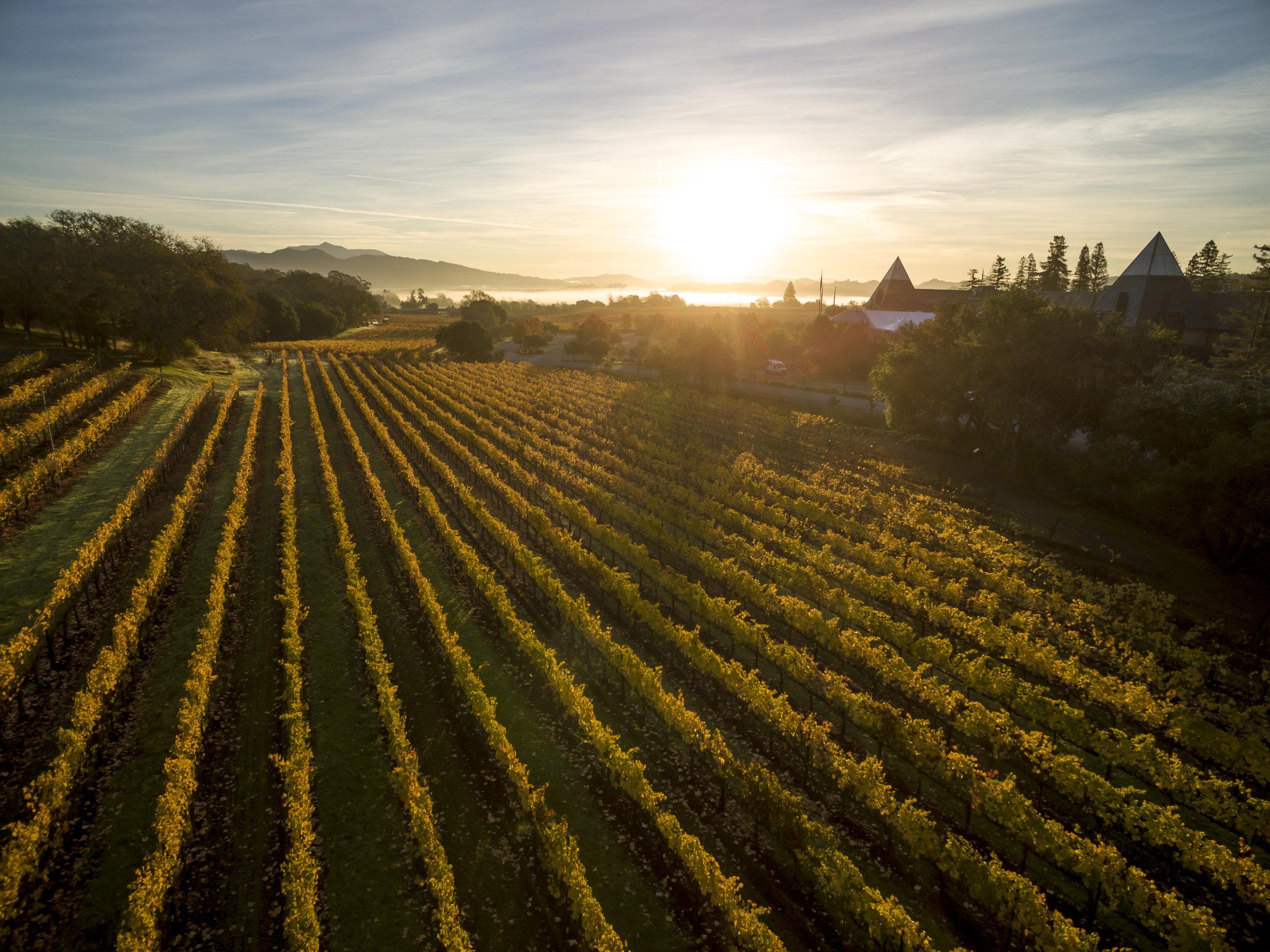Coppola Winery horizon.jpg