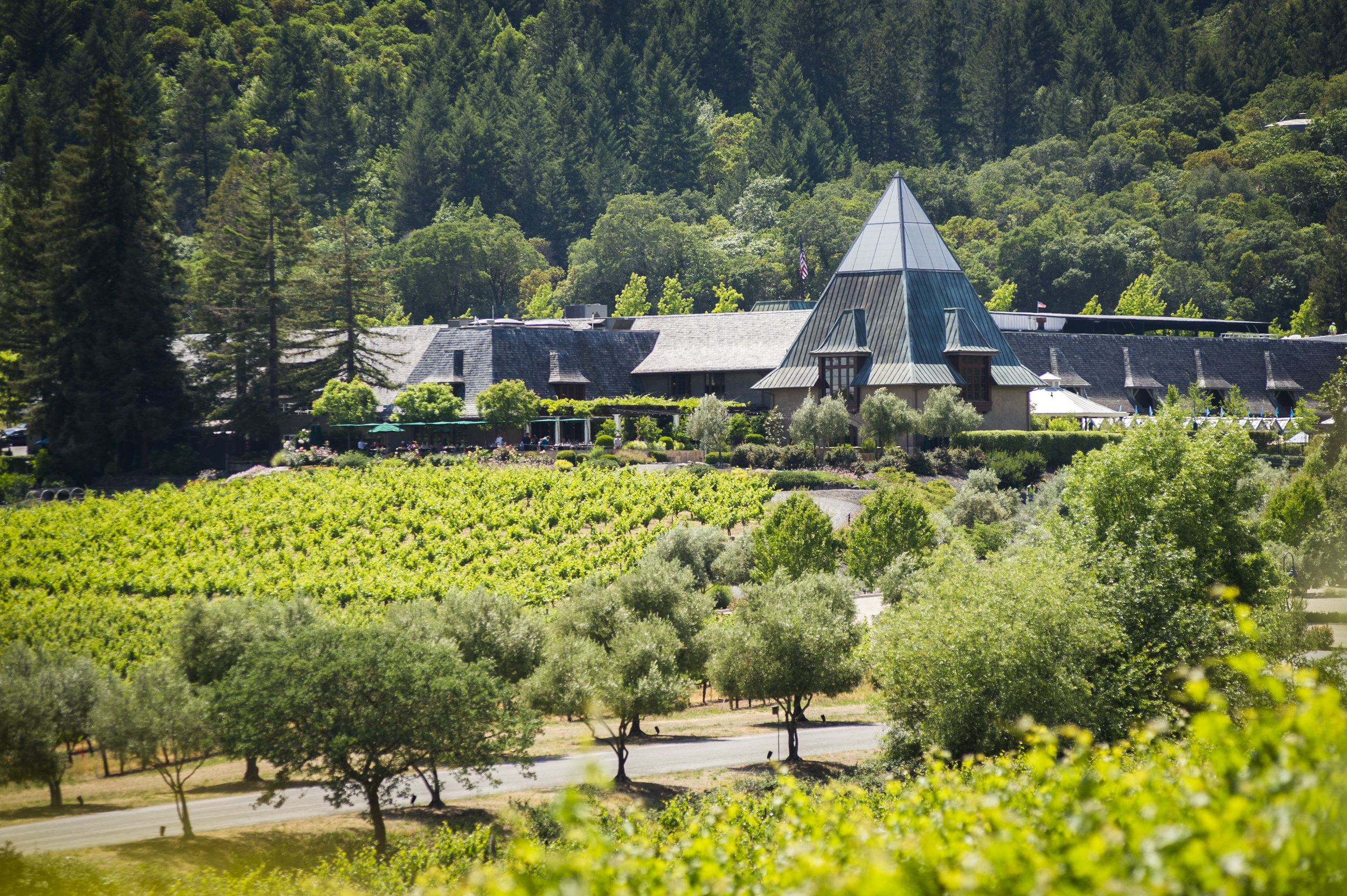 Coppola Winery exterior distance.jpg