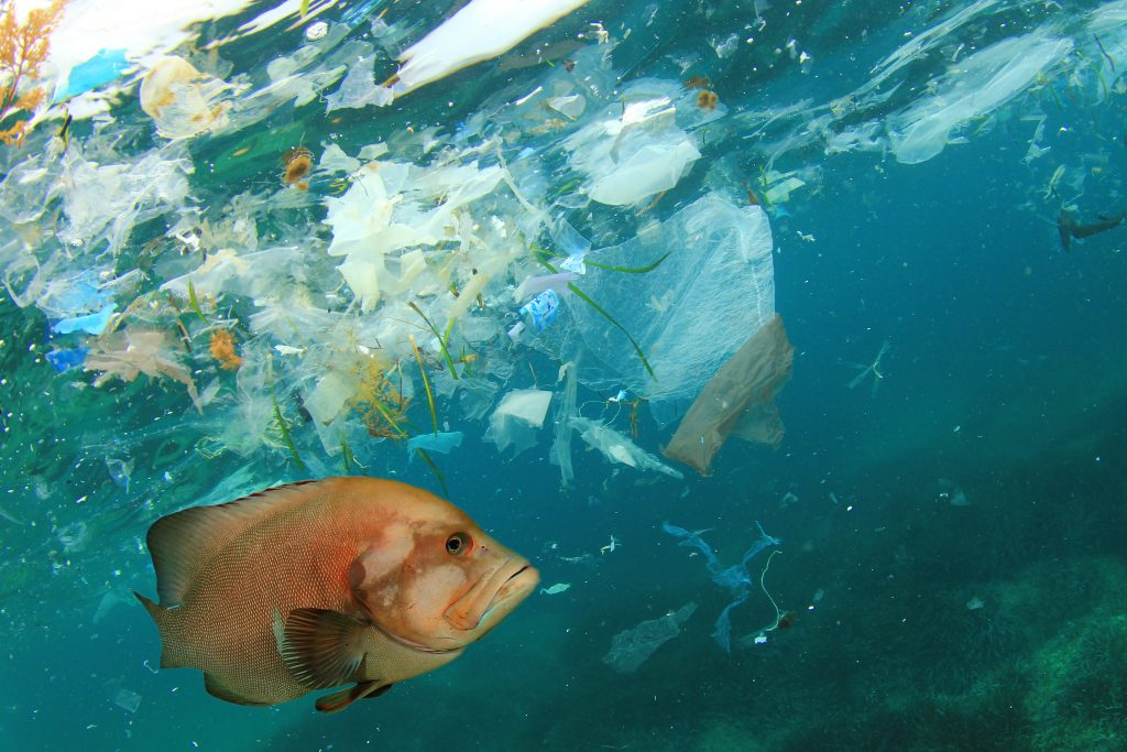 world-wildlife-fund-secures-funding-for-plastics-free-ocean-_5be0de2e78e04-1024x683.jpg