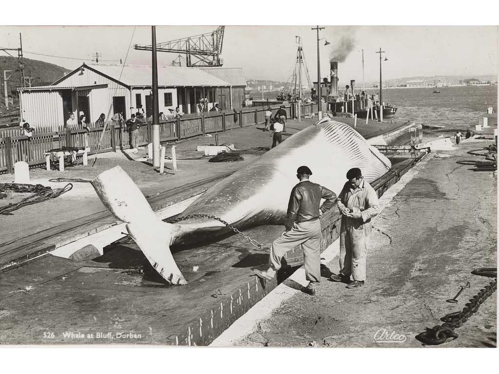 Odhner memories Whaling station Bluff.jpg