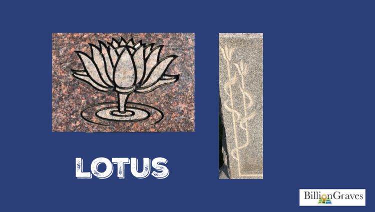 Lotus - Lotus are water-plants that close at night and reopen again with the morning sunlight. They symbolize a spiritual rebirth, reawakening and resurrection.