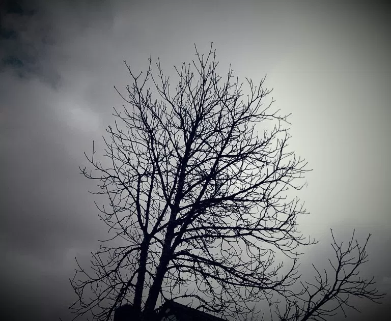 dry tree.png