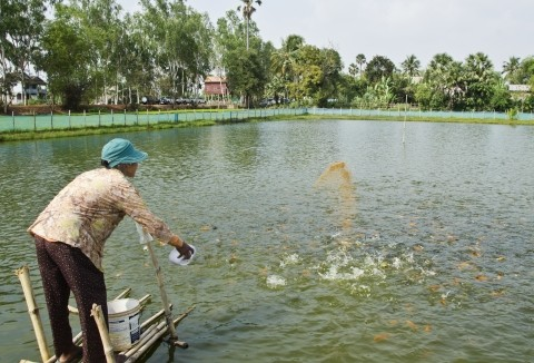 vietnam fish farm.jpg
