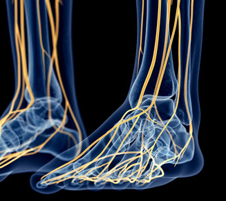 42587841_S_nerves_feet.png