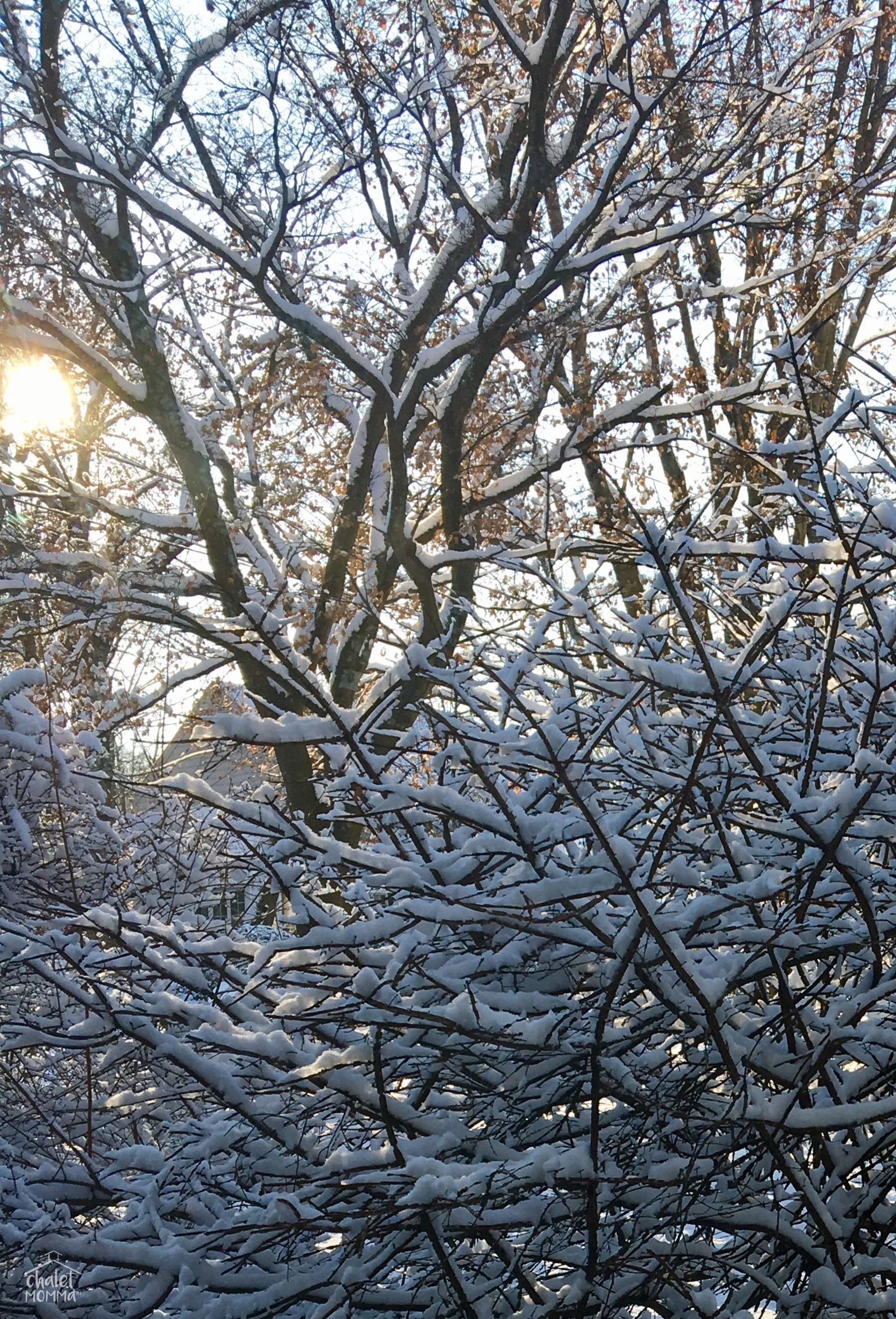 snowy burning bush wm.jpg