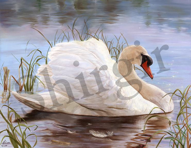 15 Swan Final big copy.jpg