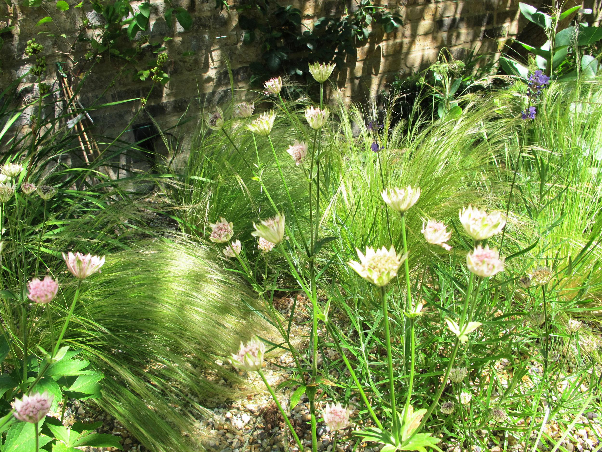 Chalcot-Square-Primrose-Hill-Planting-Cat-Howard-Garden-Design.JPG