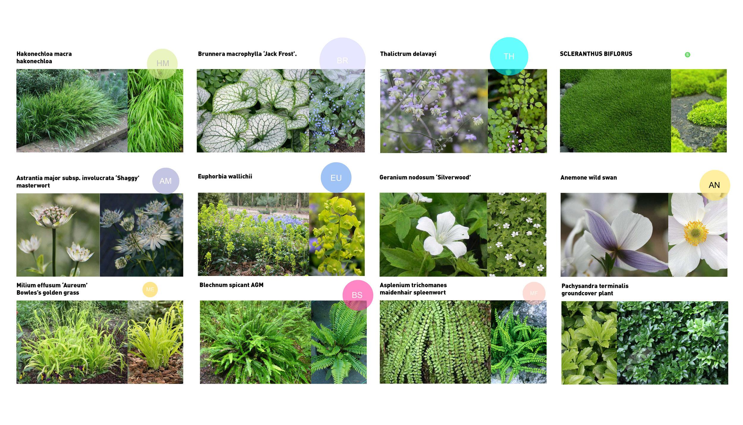 Primrose-Hill-London-Planting-Plan-Cat-Howard-Garden-Design.JPG
