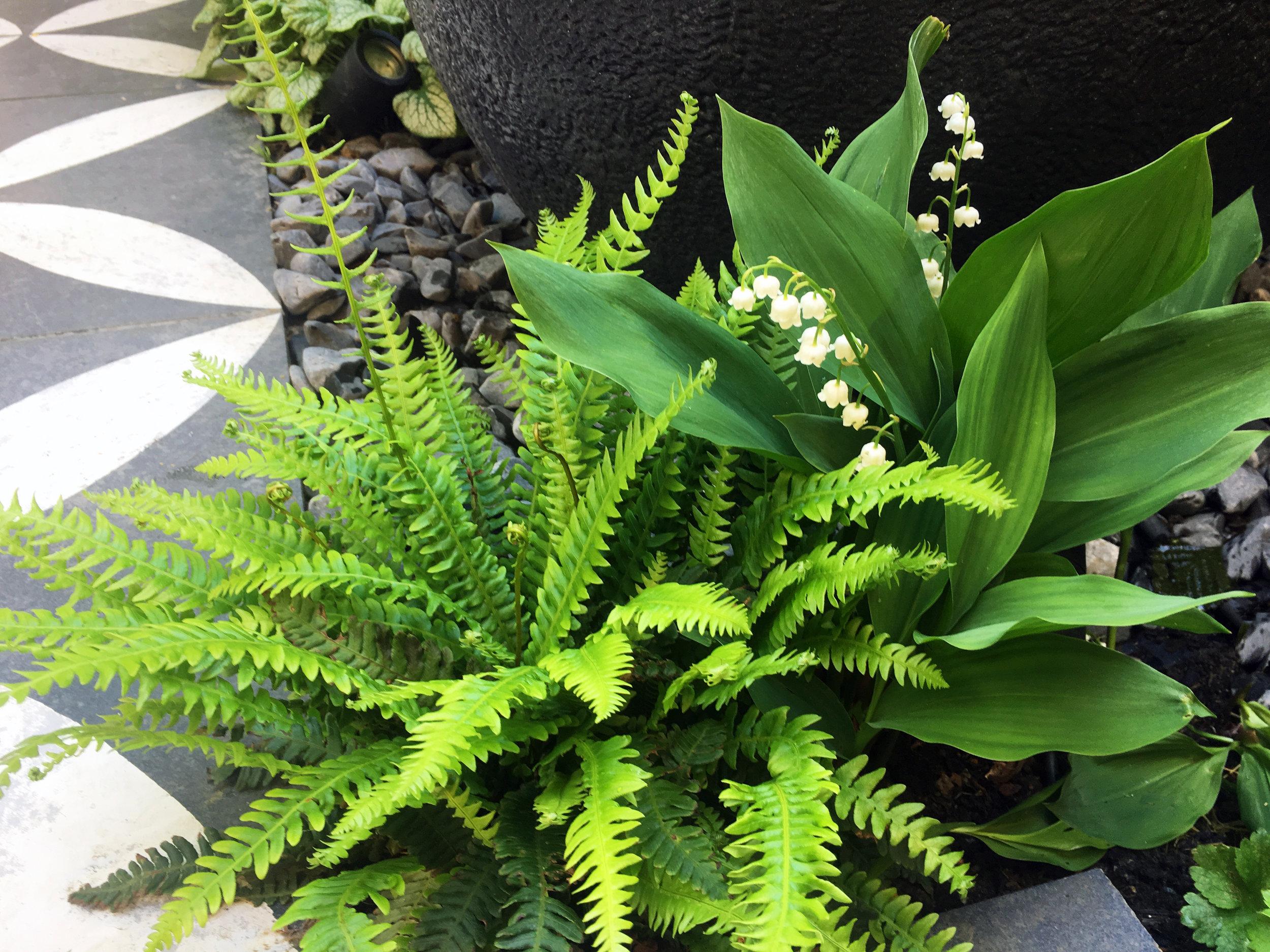 Primrose_Hill_Planting_Cat_Howard_garden_design
