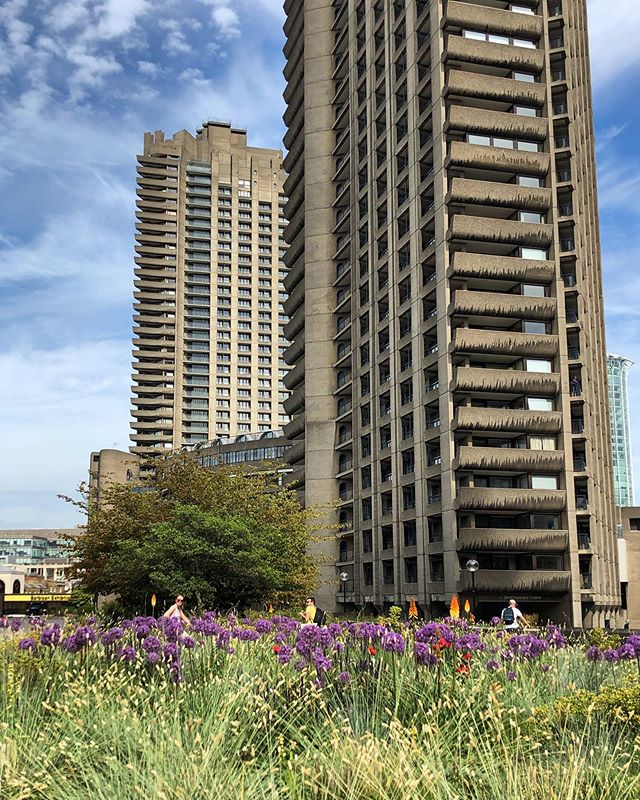 It was wonderful to walk through Nigel Dunnett's @nigel.dunnett planting design at Barbican yesterday. I love how the wildness of the planting softens and contrasts with the brutalist architecture. Here the grass Melica ciliata provides a foil for purple Alliums, euphoria and with some hot pokers and large red Poppy's poking through . . . #steppeplanting #plantingdesign #barbican #alwaysworking #site #nigeldunnett #perennial