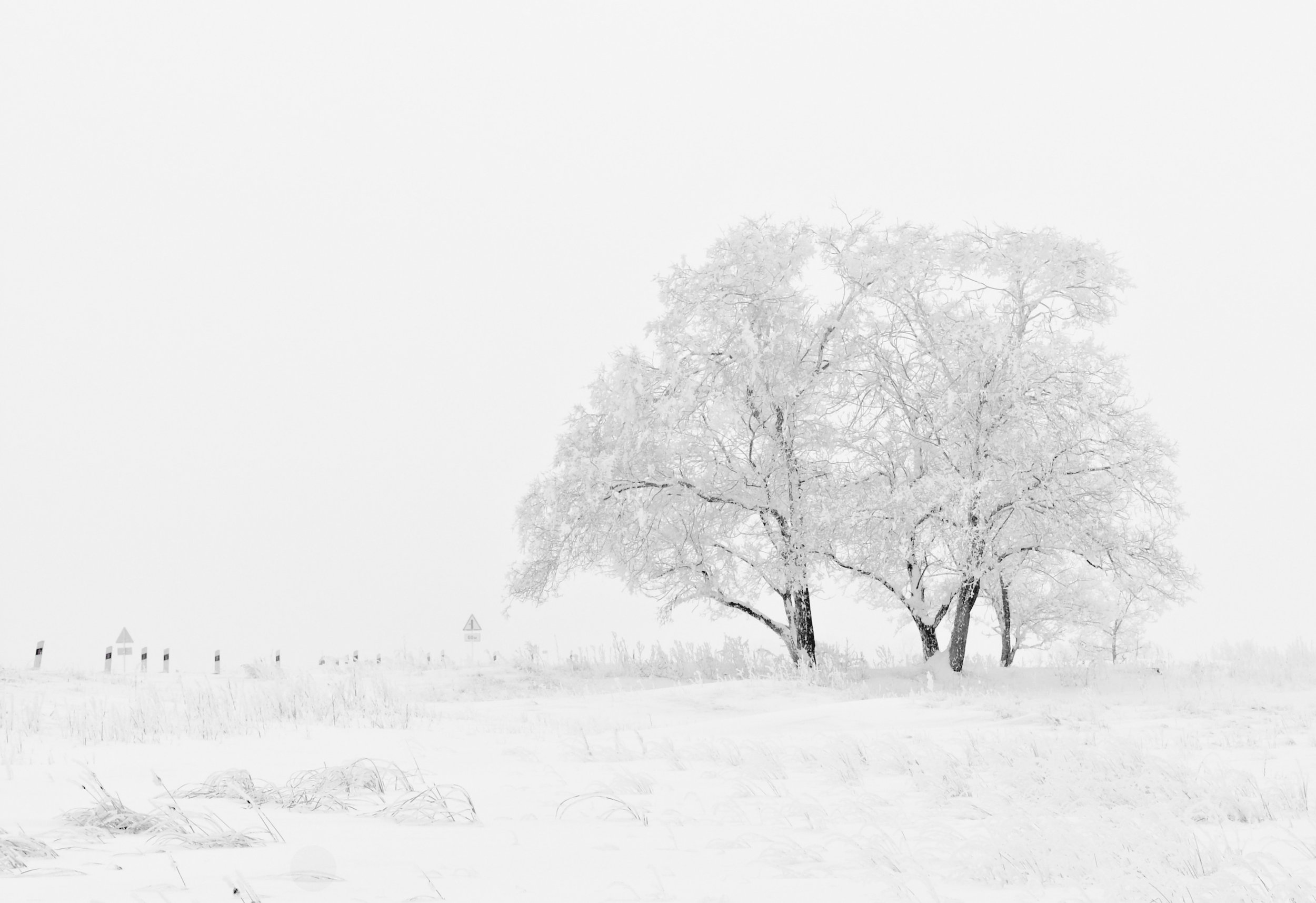winter-nature-season-trees-66284.jpeg