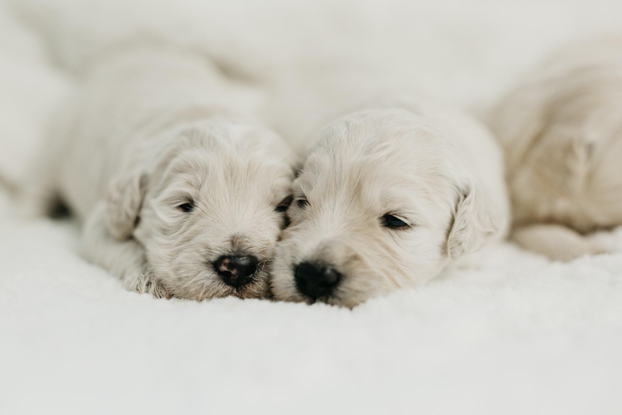 Puppies-Week-2-7.jpg