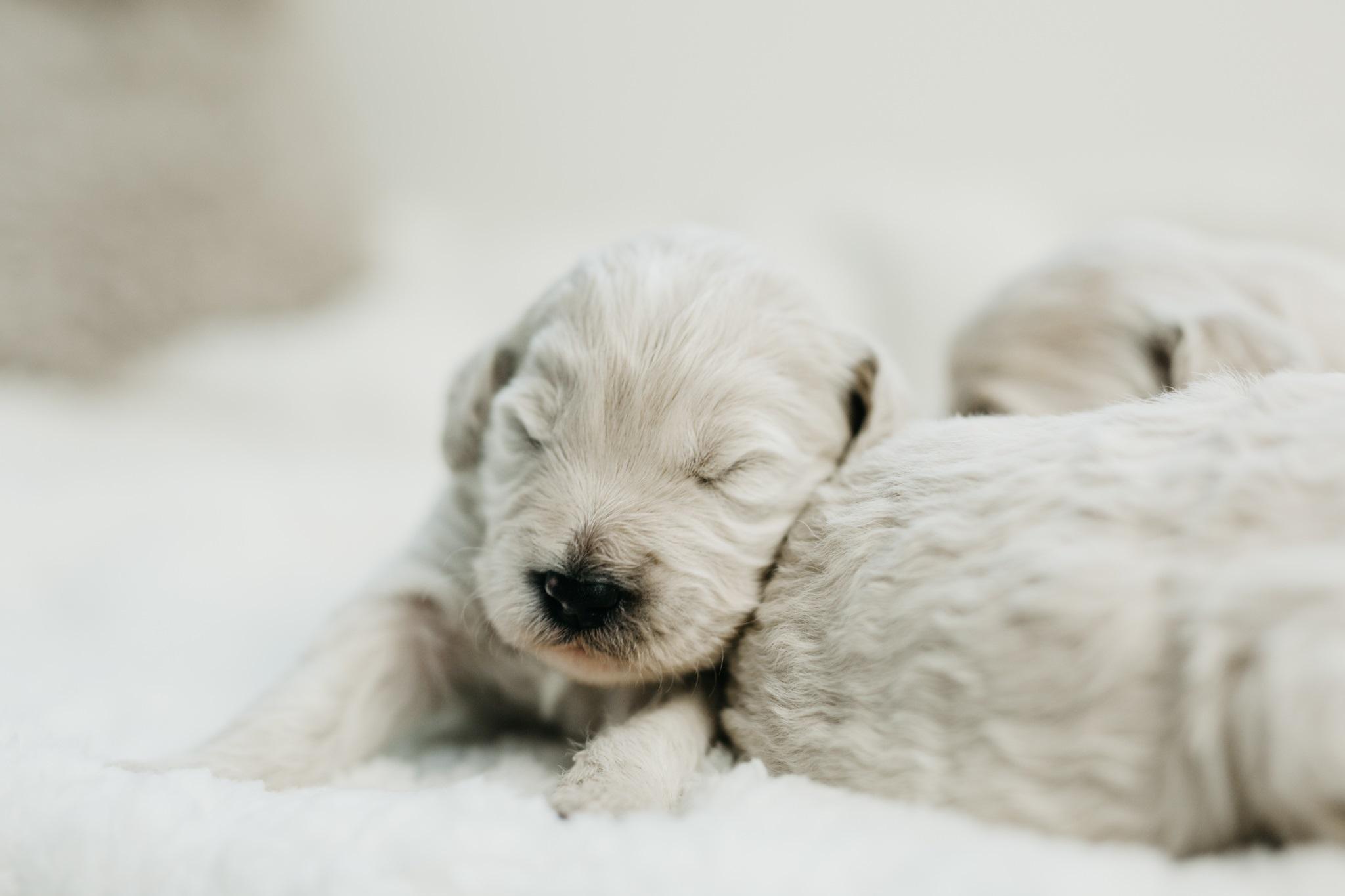 Puppies-Week-2-35.jpg