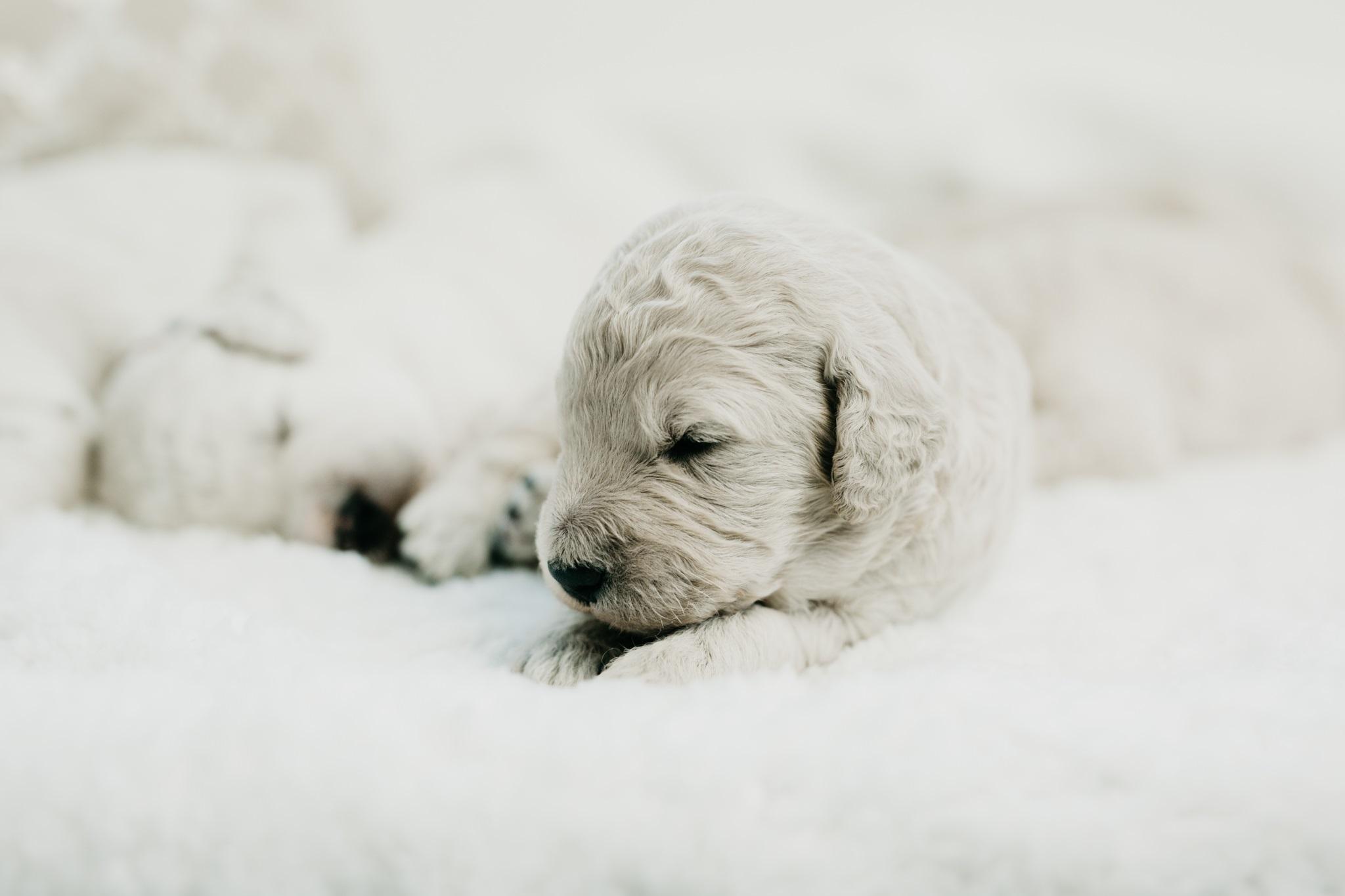 Puppies-Week-2-138.jpg