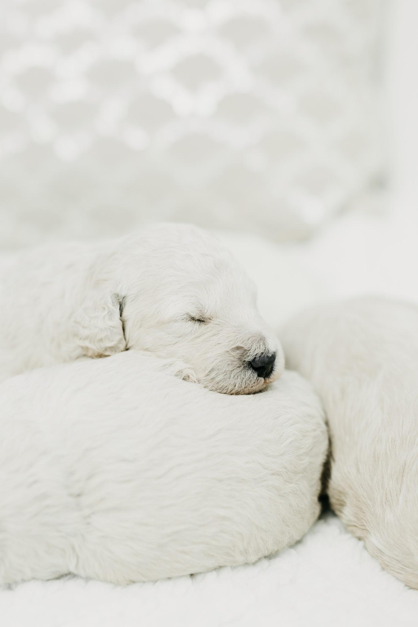Puppies-Week-2-146.jpg