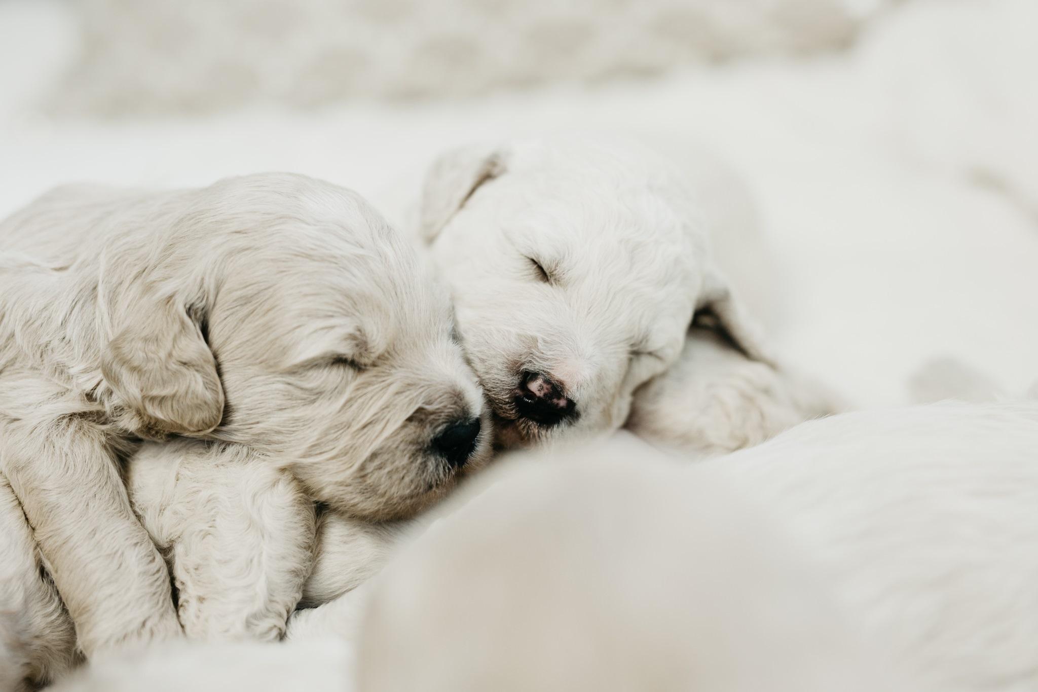 Puppies-Week-2-169.jpg