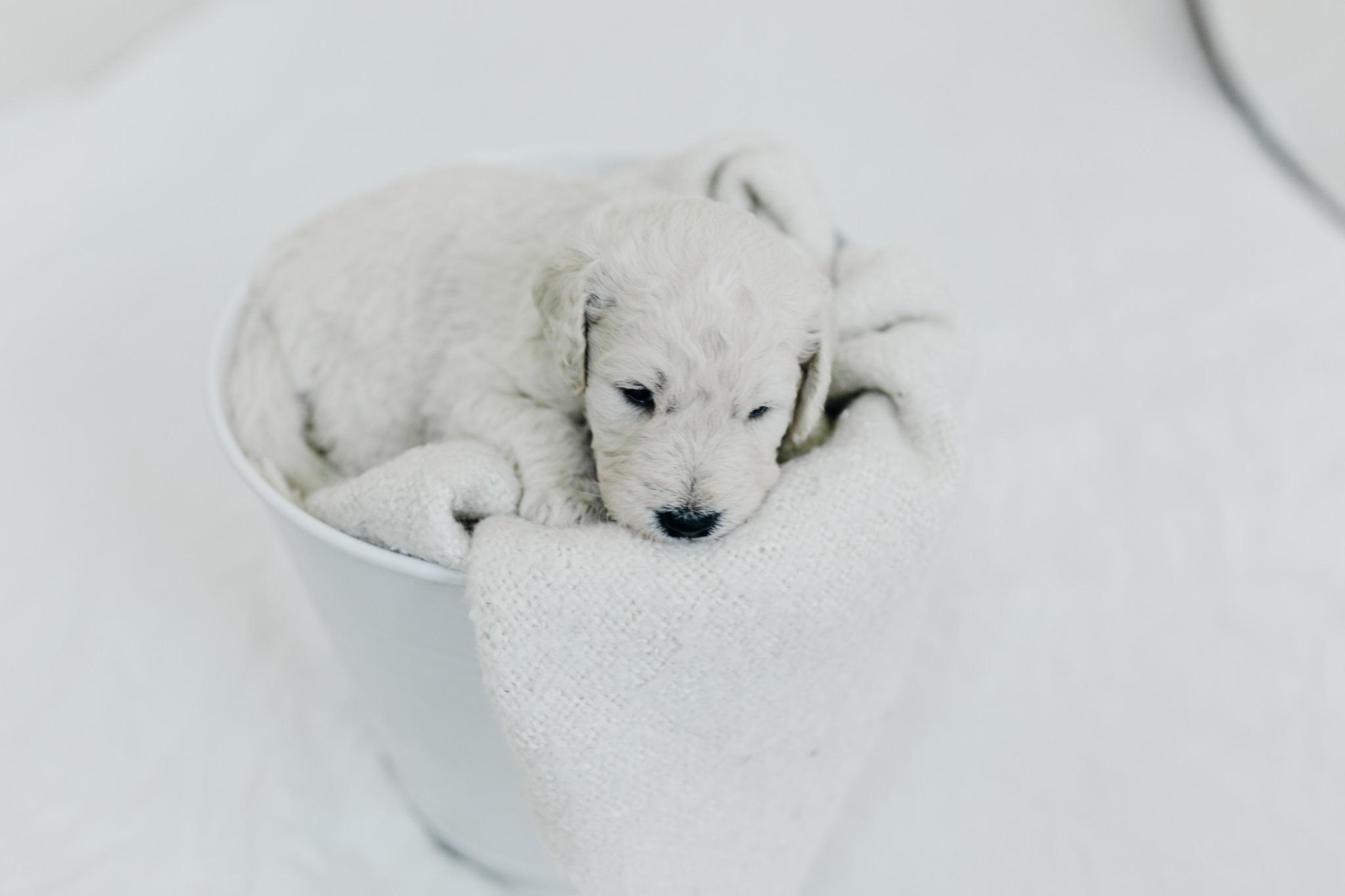 Puppies-Week-3-7.jpg