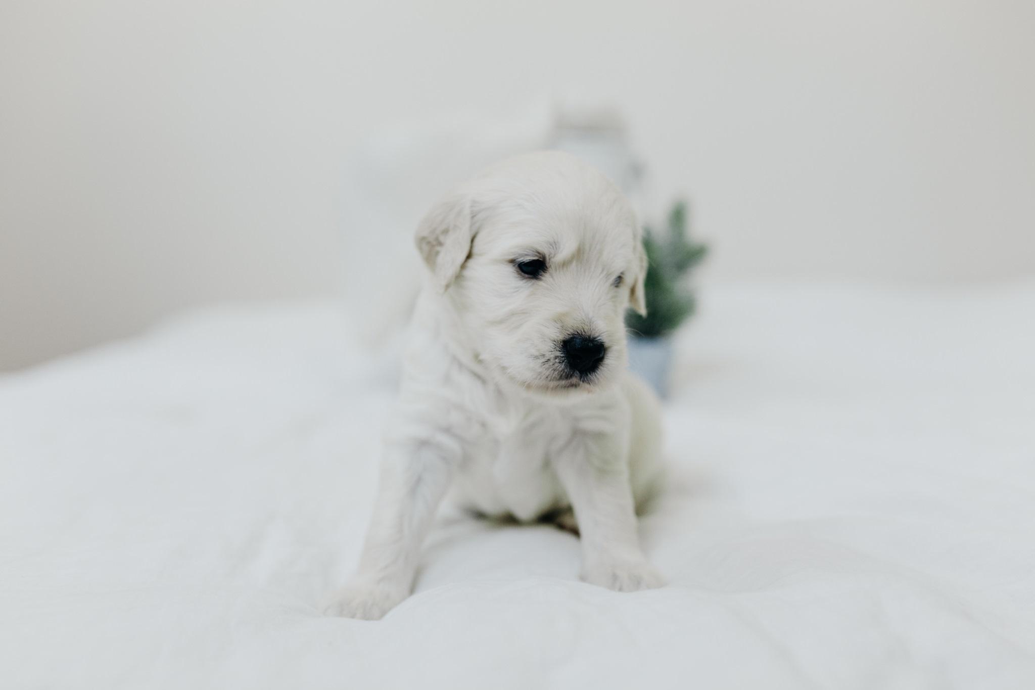 Puppies-Week-3-11.jpg