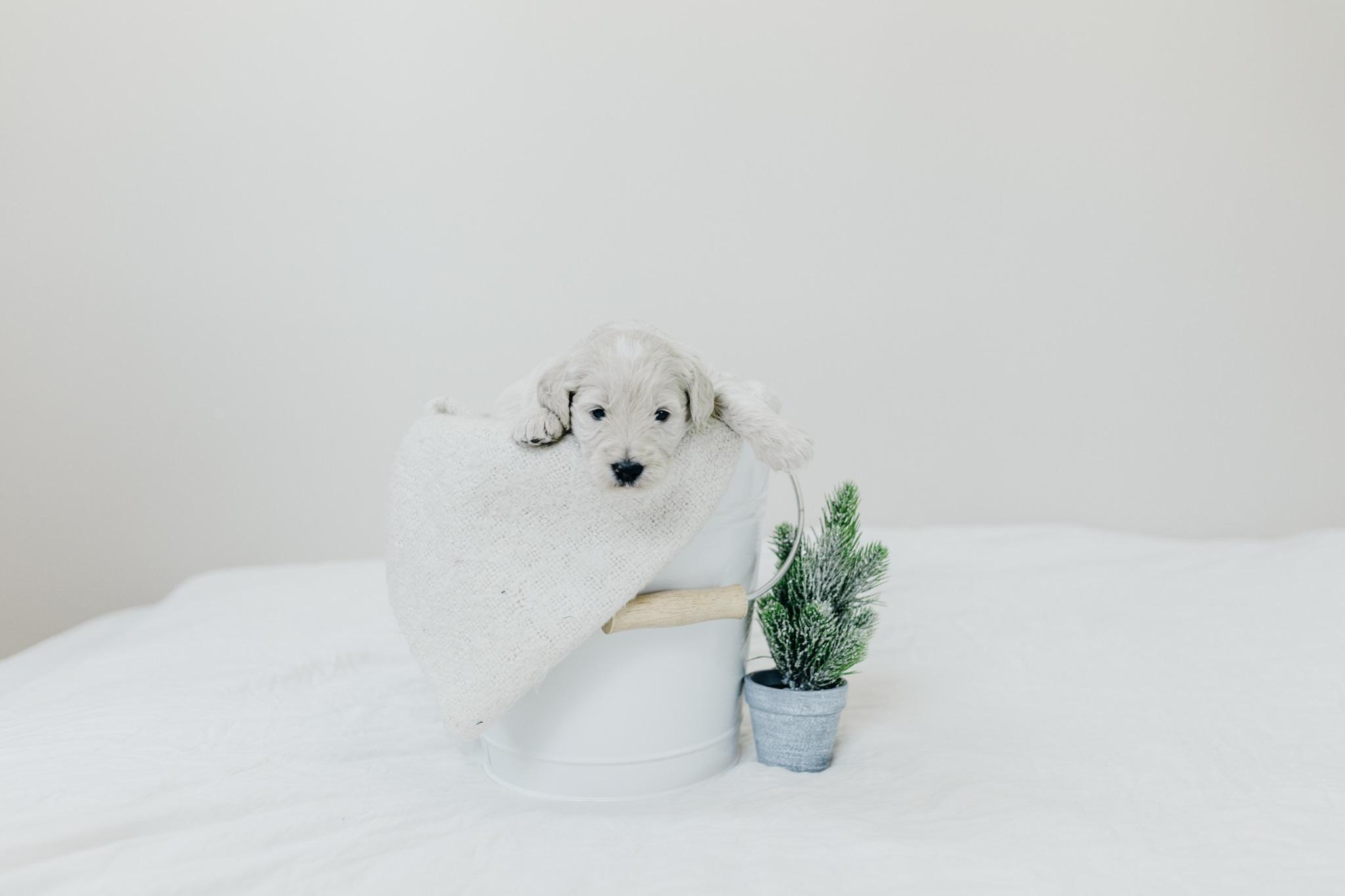 Puppies-Week-3-10.jpg