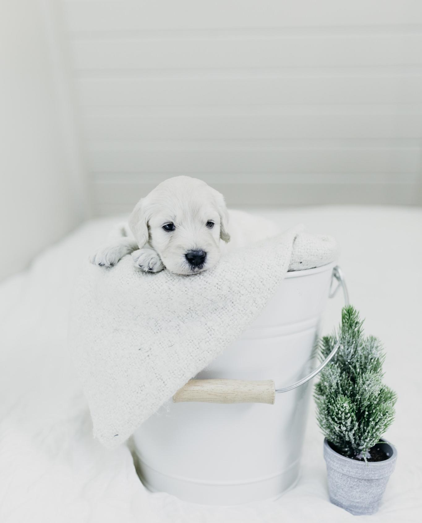 Puppies-Week-3 (2).jpg