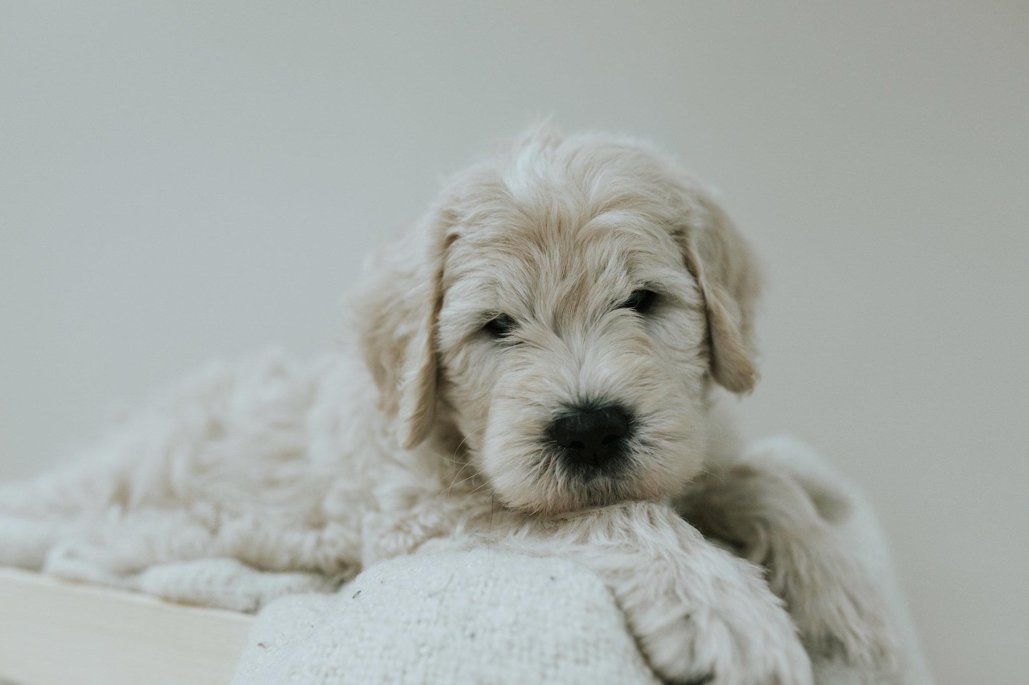 Puppies-Week-6-135.jpg