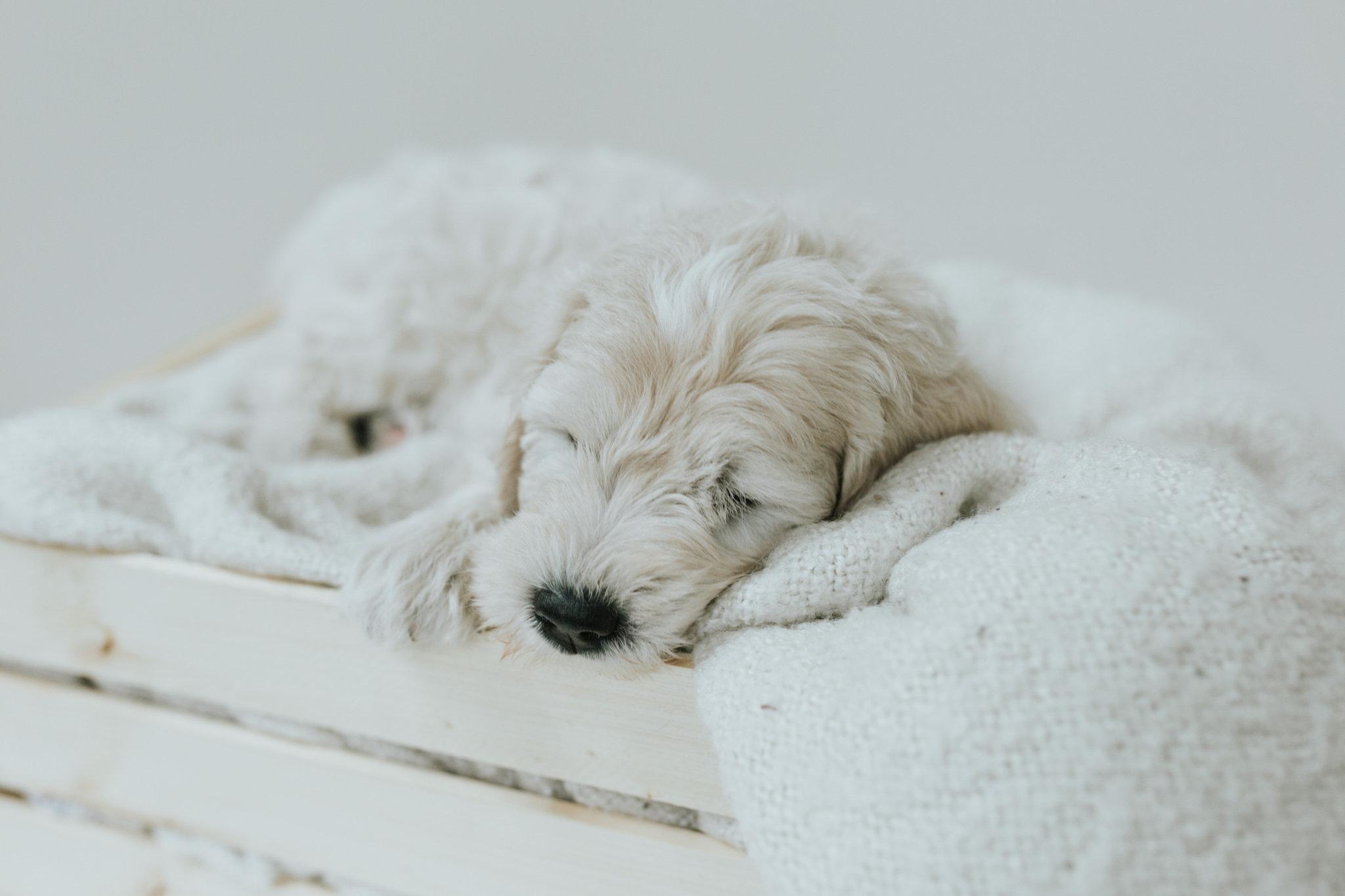 Puppies-Week-6-123.jpg