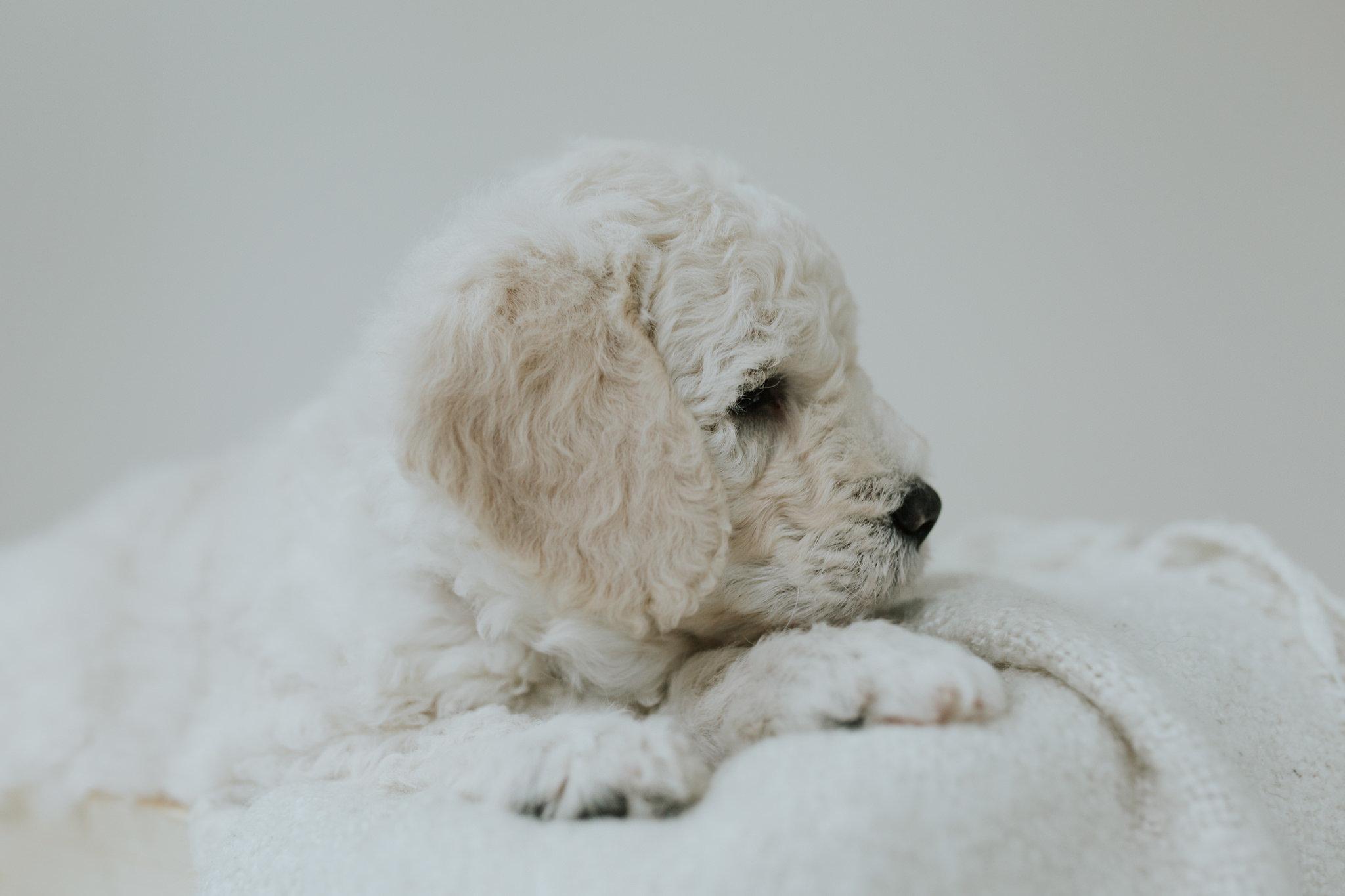 Puppies-Week-6-89.jpg