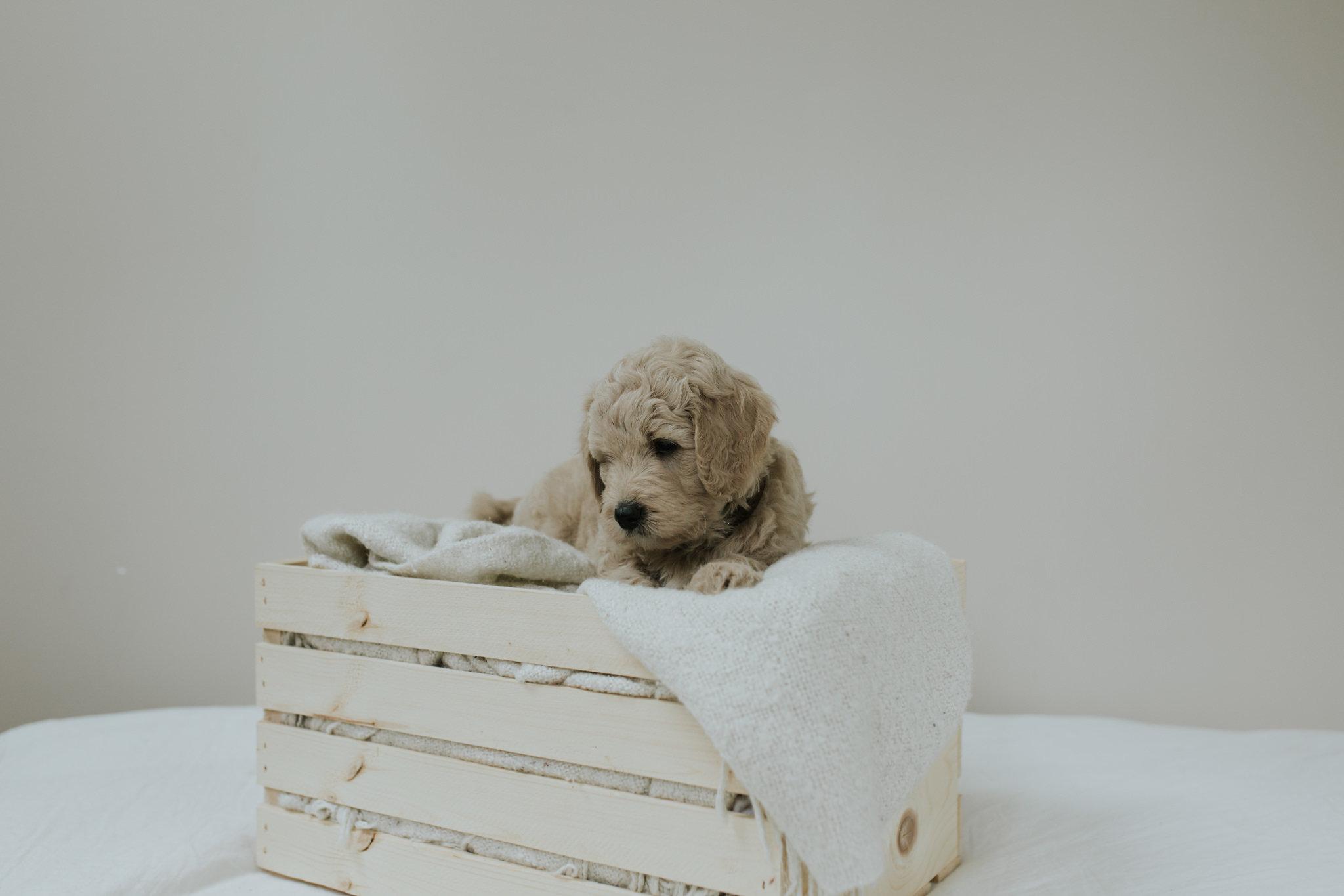 Puppies-Week-6-36.jpg