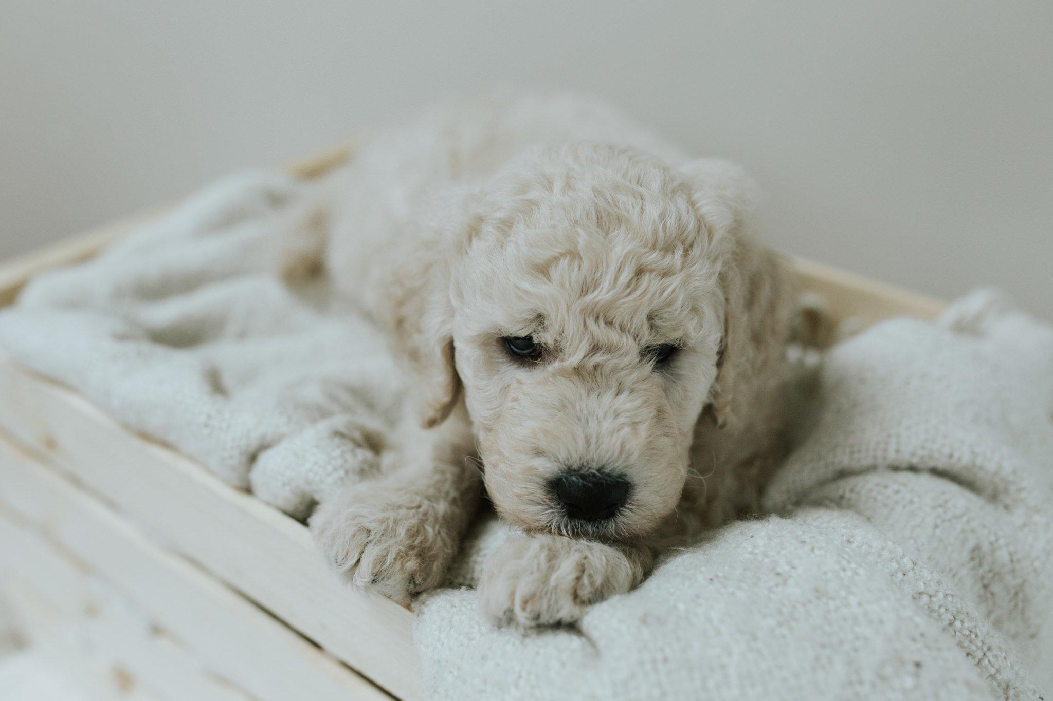 Puppies-Week-6-150.jpg