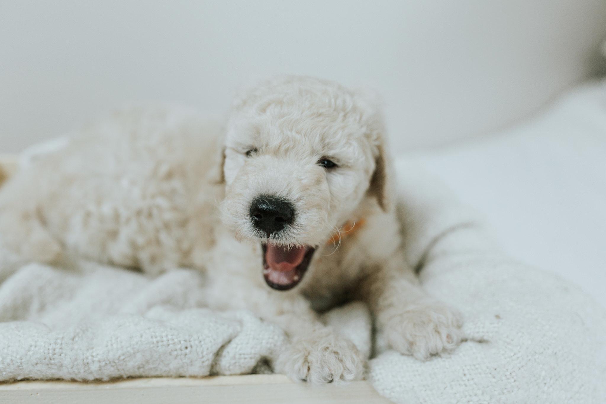 Puppies-Week-6-153.jpg