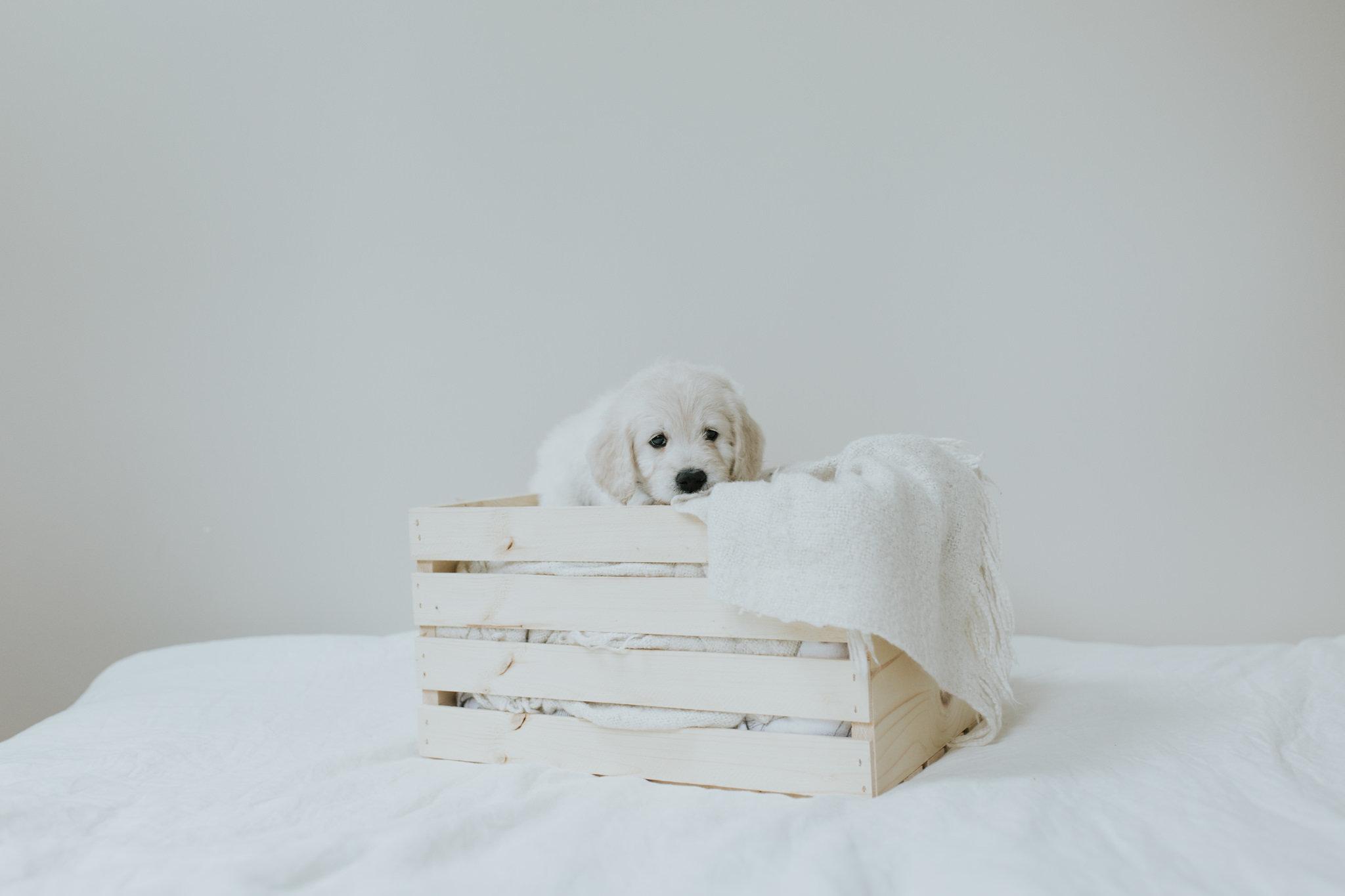Puppies-Week-6-99.jpg