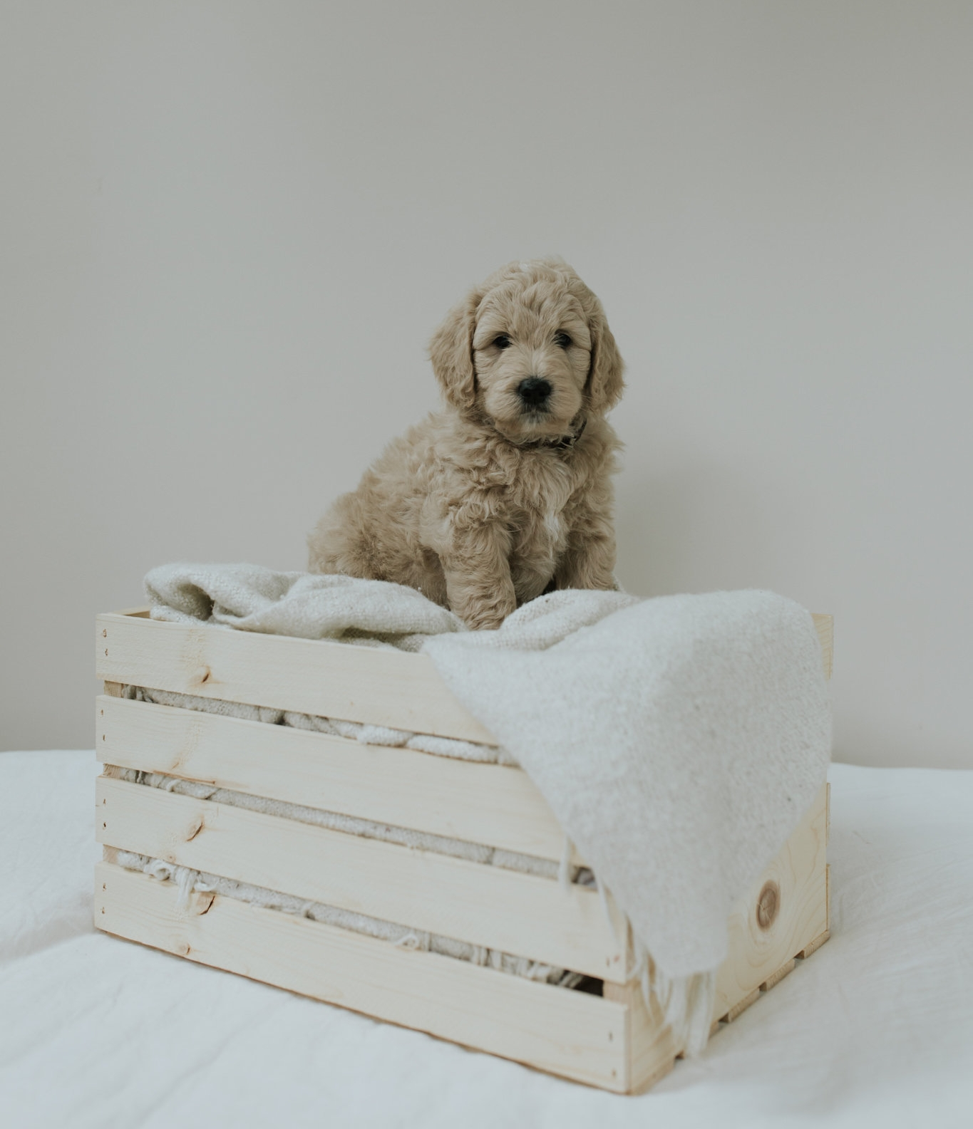 Puppies-Week-6-35.jpg