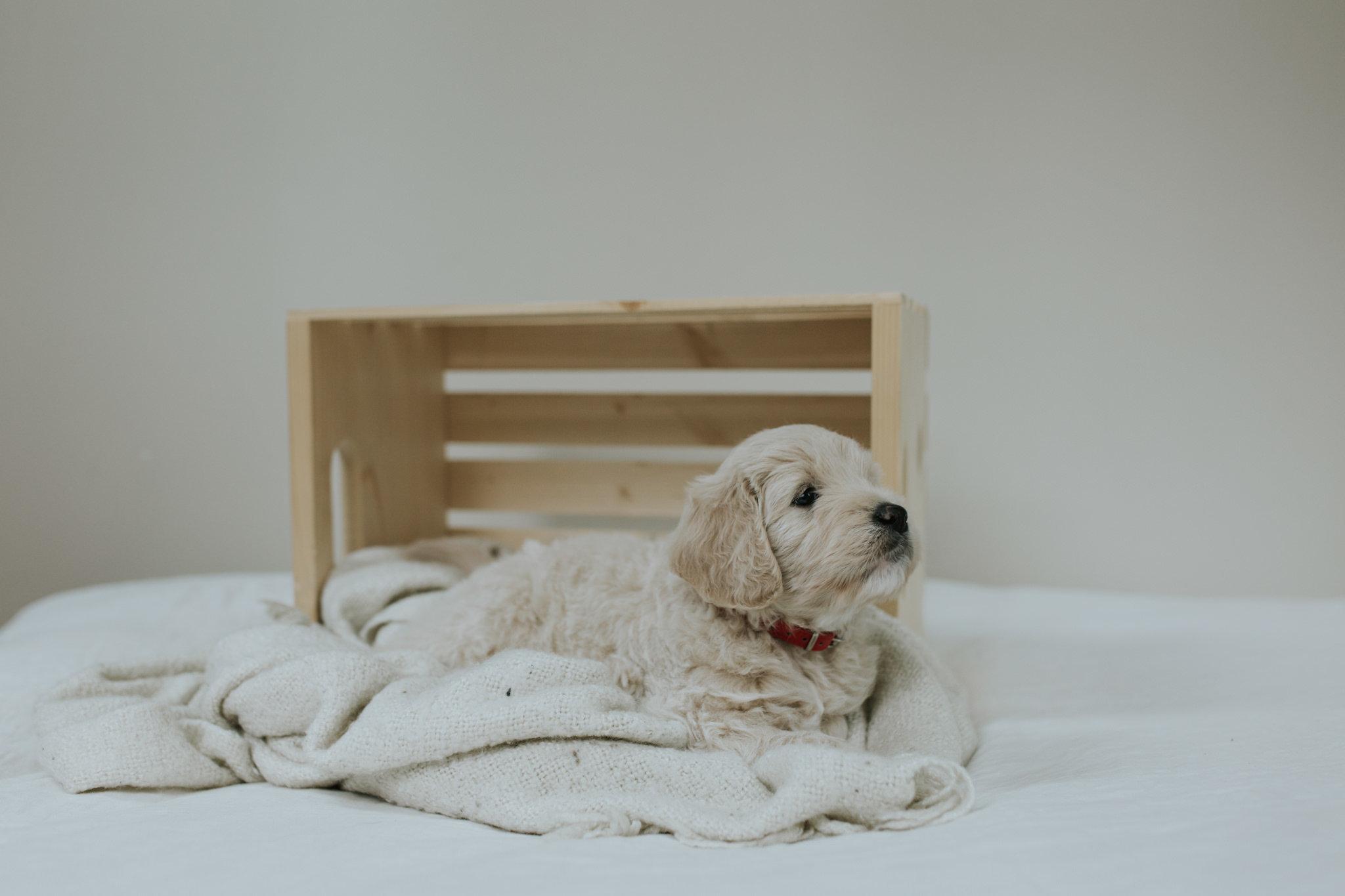 Puppies-Week-6-67.jpg