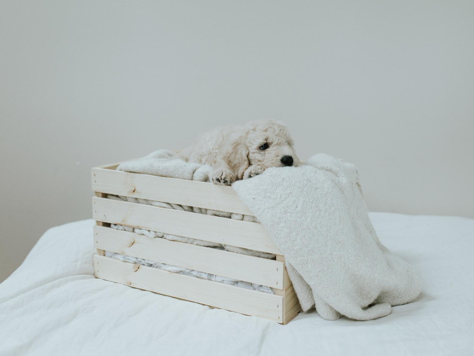 Puppies-Week-6-151.jpg