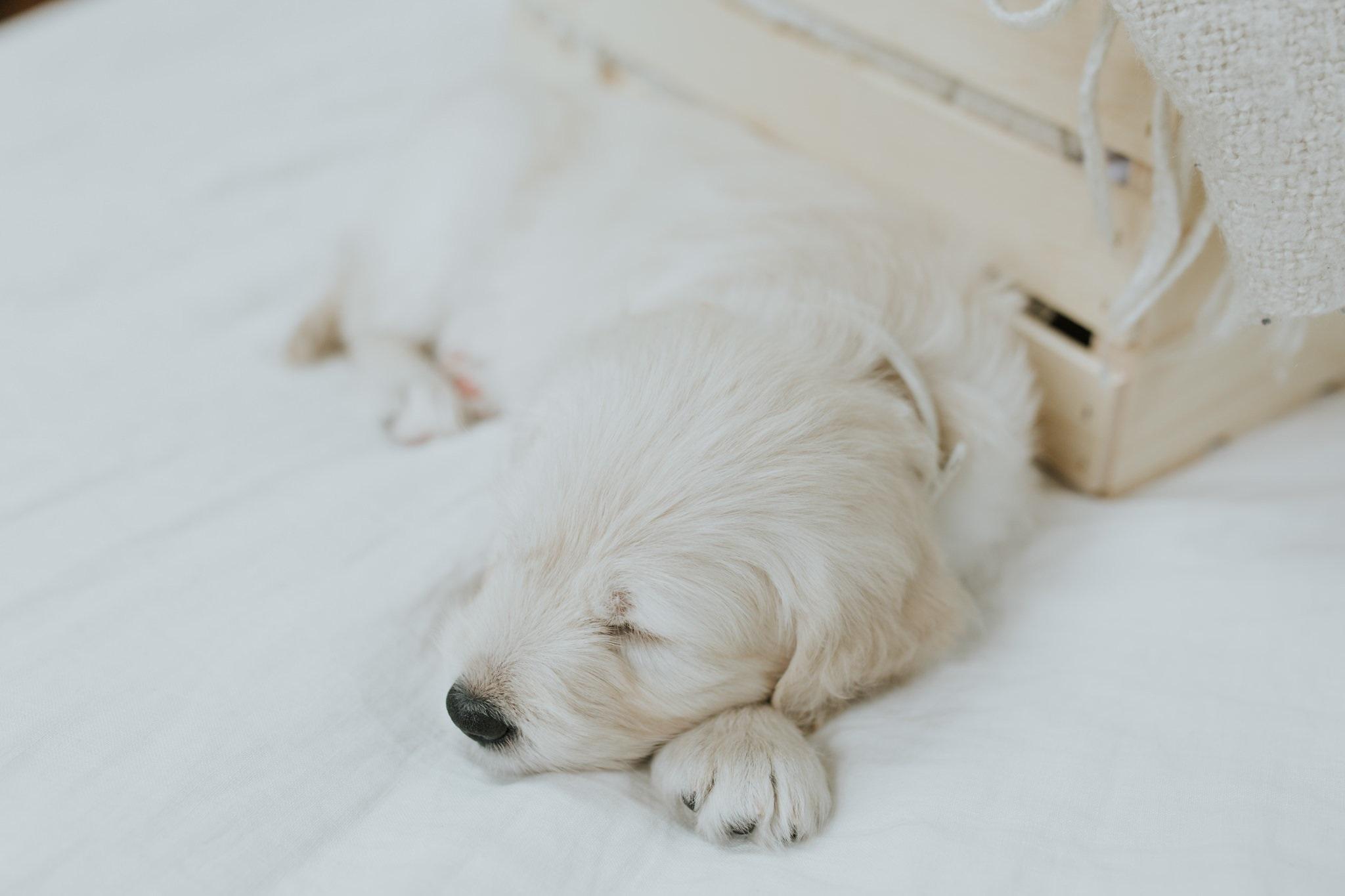 Puppies-Week-6-14.jpg