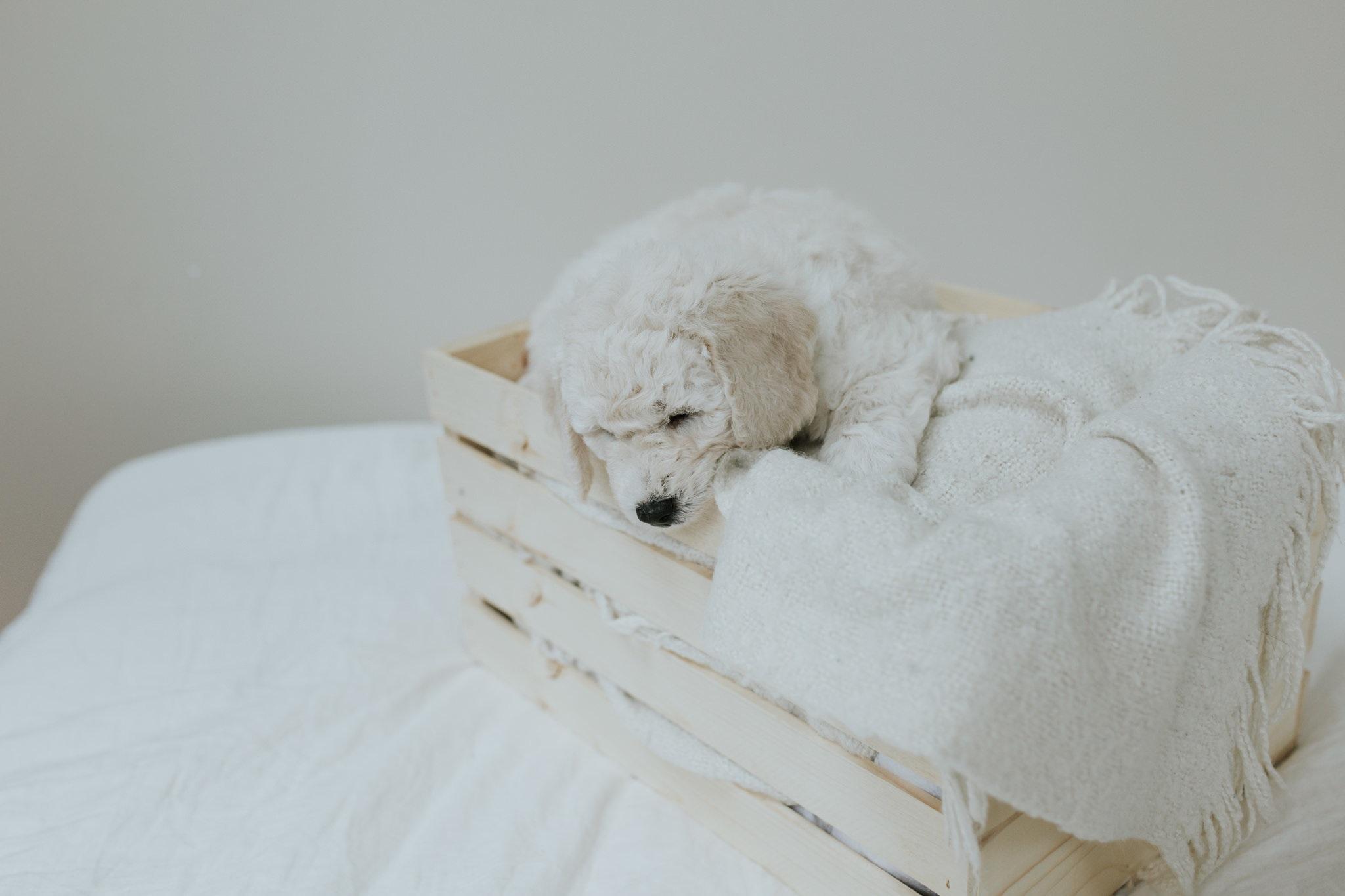 Puppies-Week-6-93.jpg