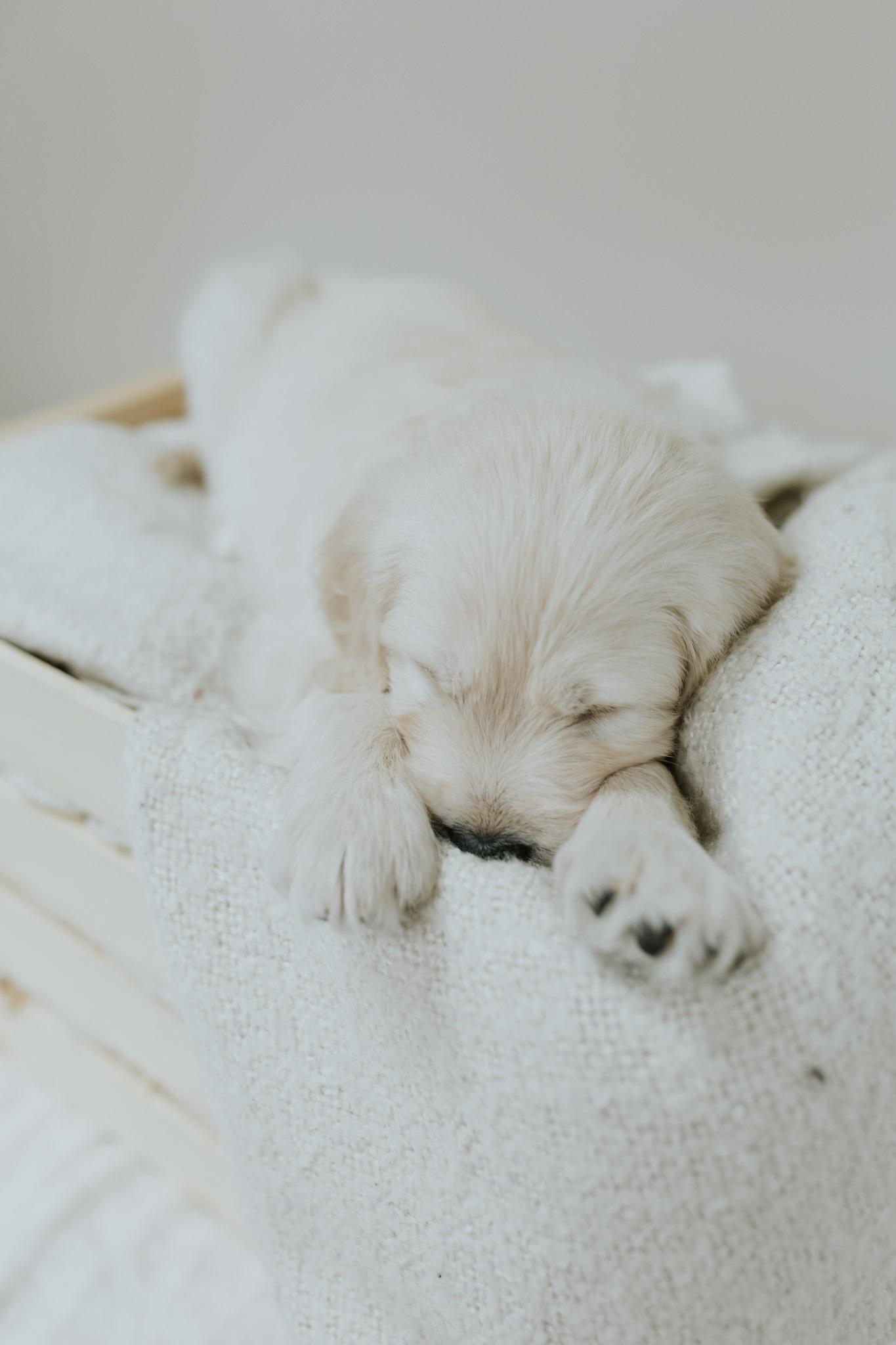 Puppies-Week-6-8.jpg