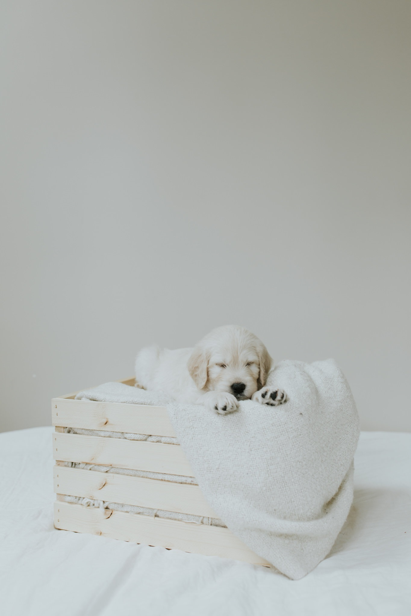 Puppies-Week-6-6.jpg