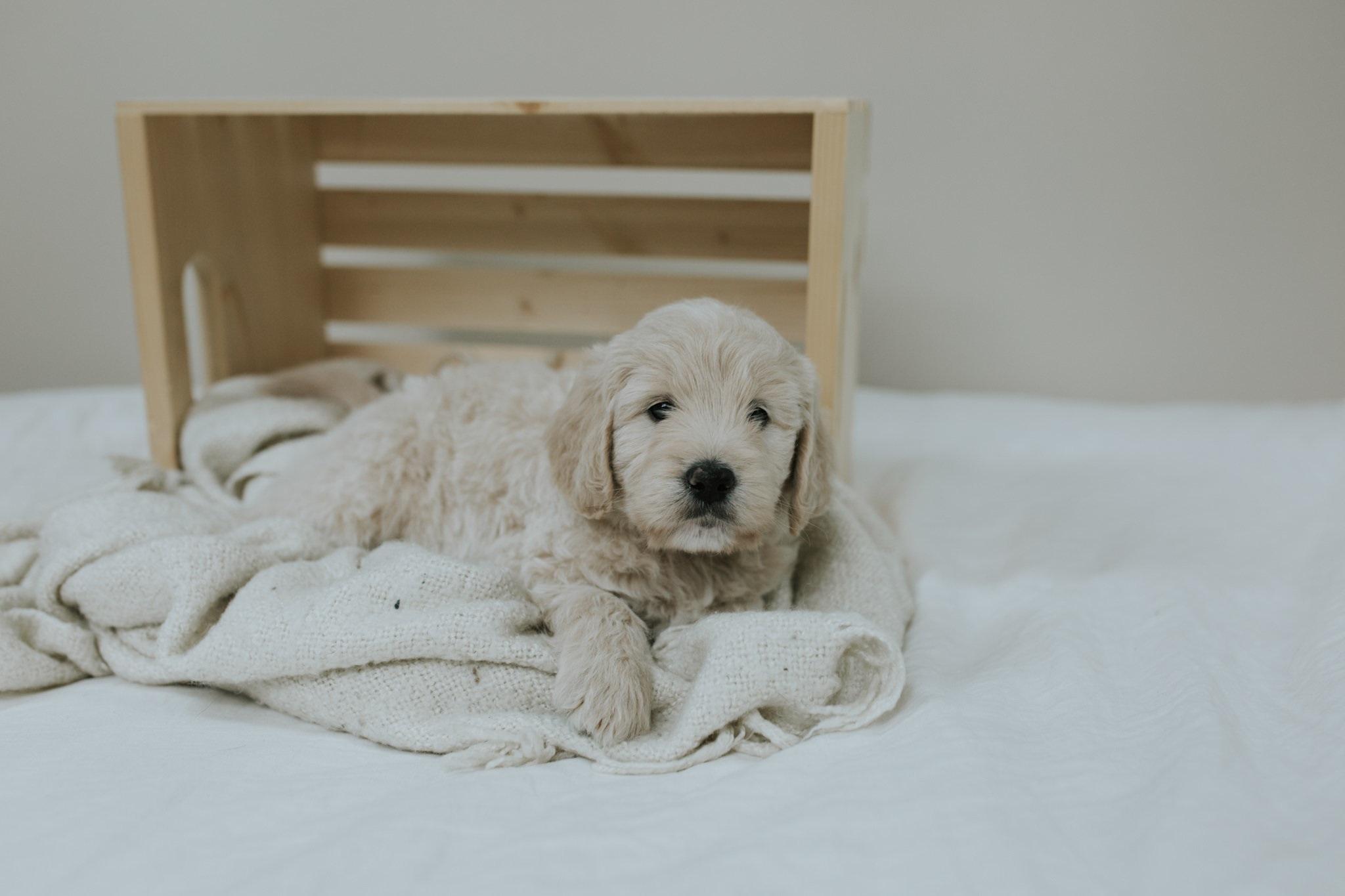 Puppies-Week-6-63.jpg