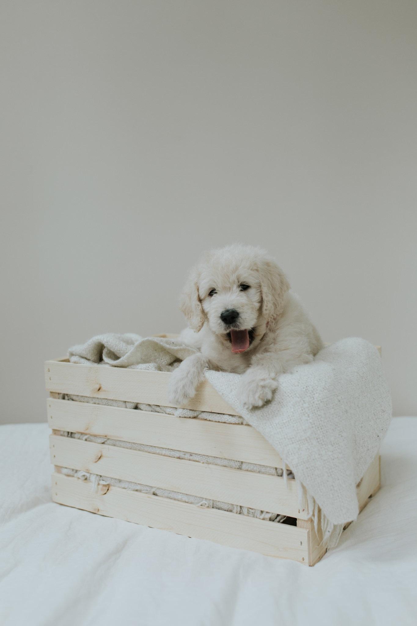 Puppies-Week-6-39 (1).jpg