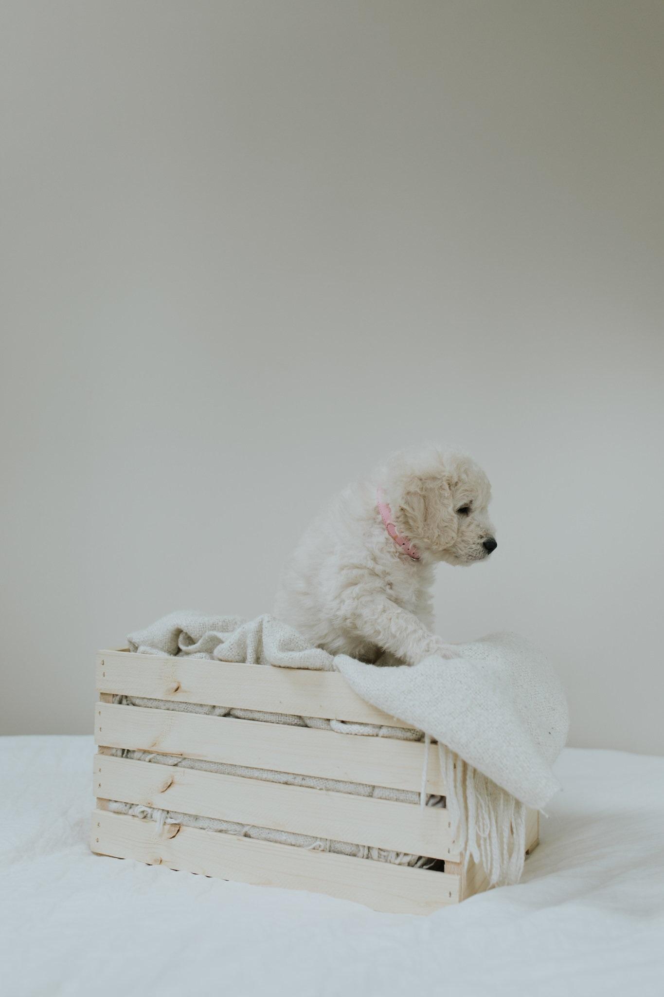 Puppies-Week-6-53.jpg