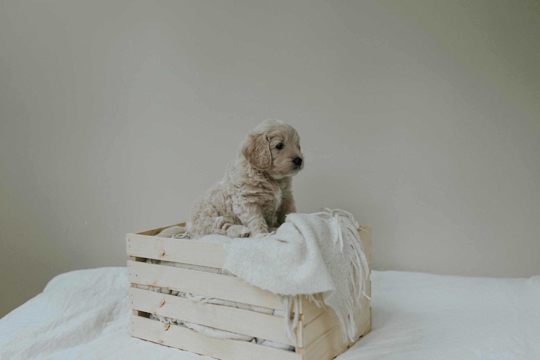 Puppies-Week-6-72.jpg