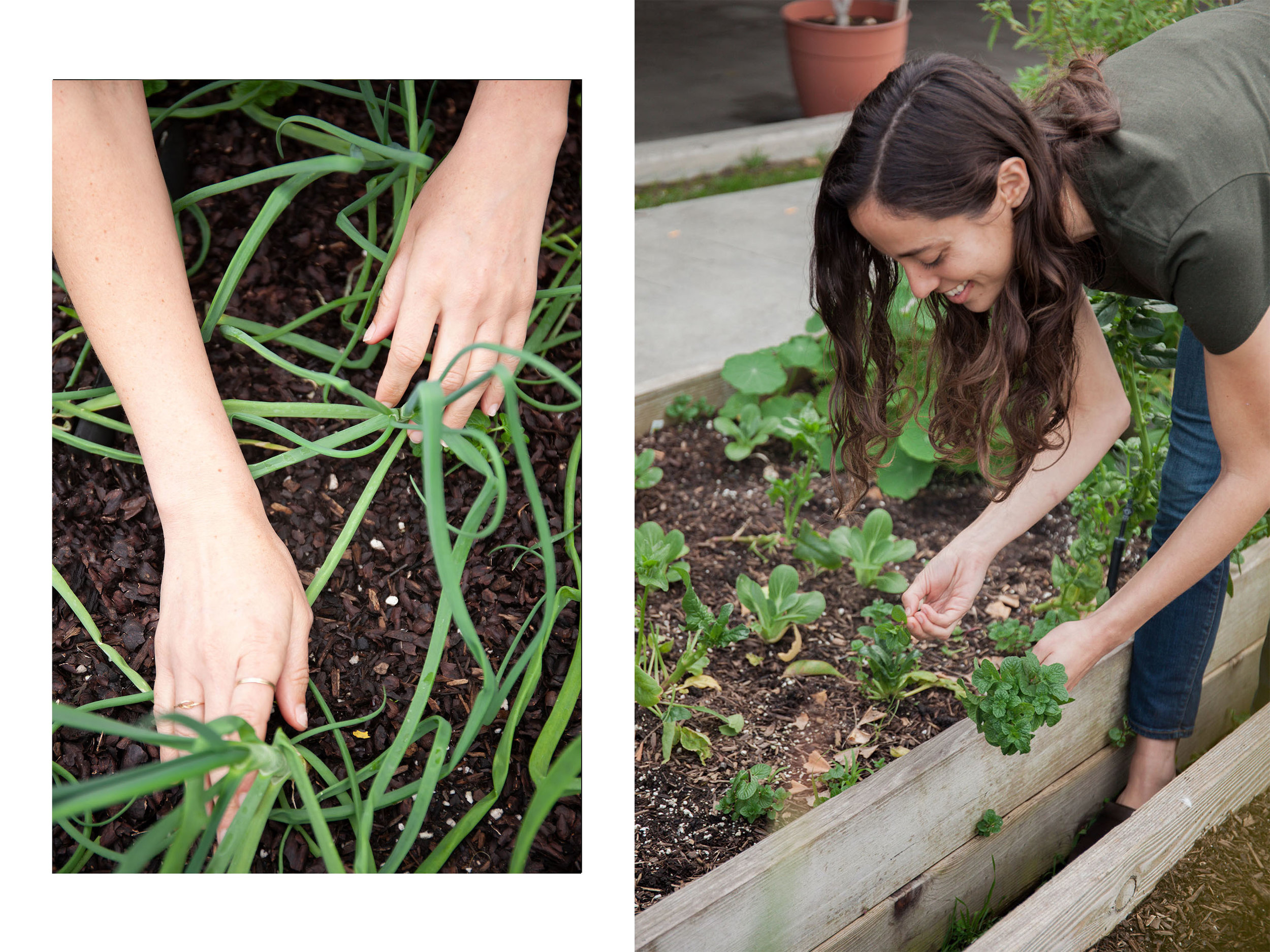 Akasa Community Brand Feature on Nature and Intent | Gardening | Food Health