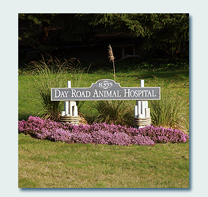 Day Road Animal Hospital sign on front lawn. Links to About.