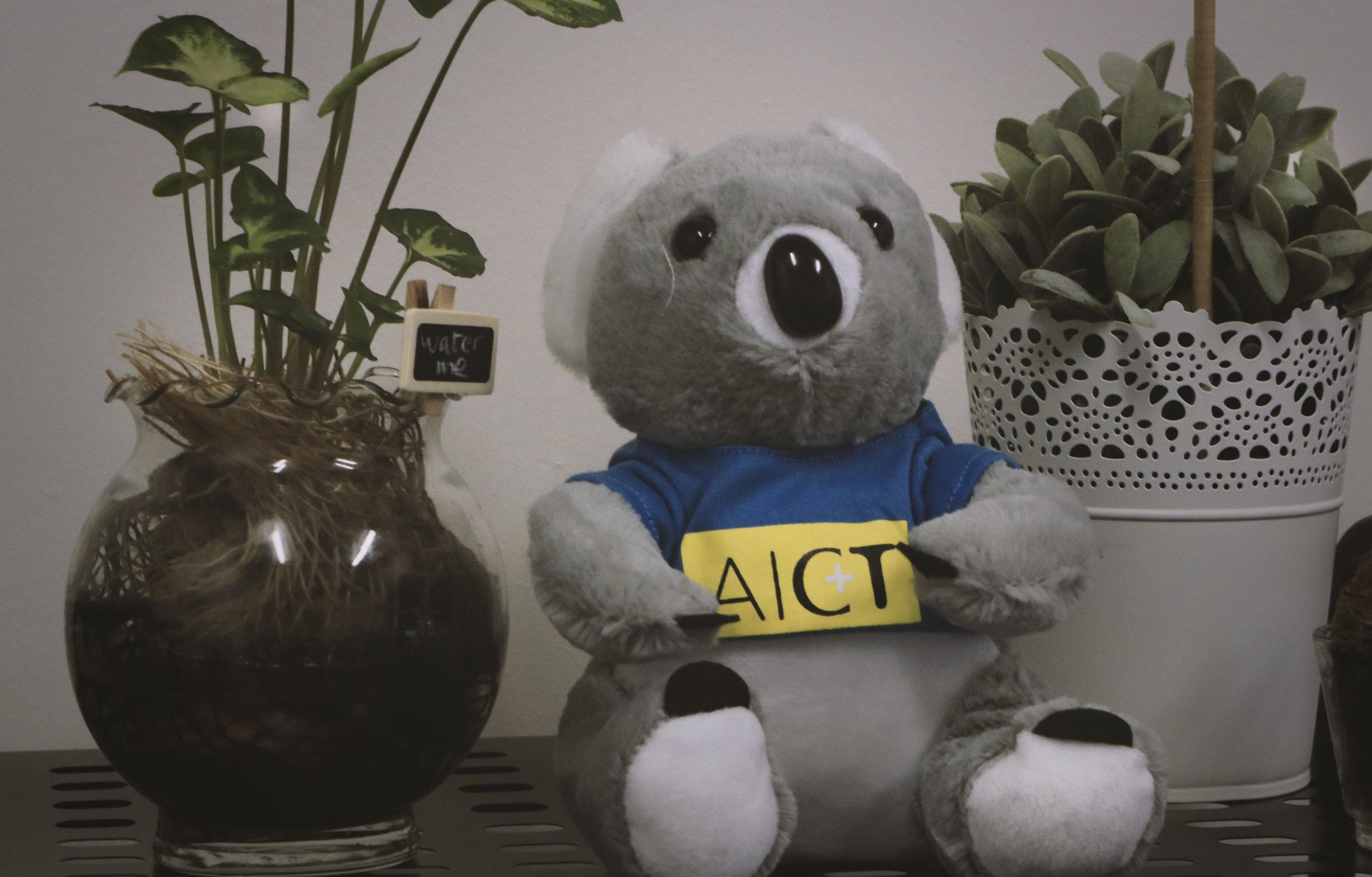 AICT Bear
