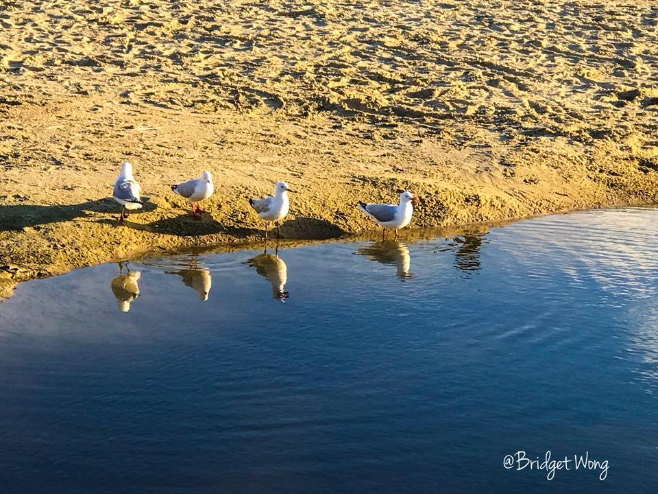birds water.jpg