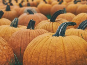 Come, say hello, snap some pics, and buy those pumpkins  - Pics are free when you #atthepatch