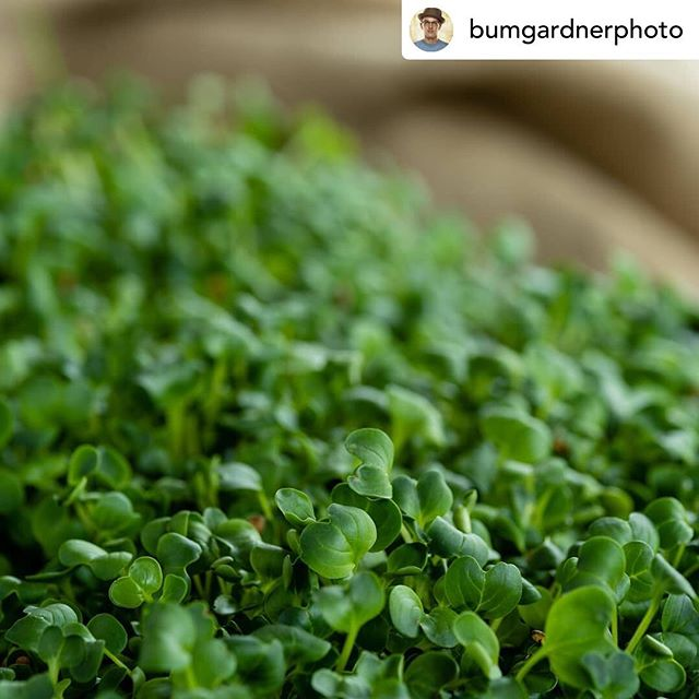 Posted @withrepost • @bumgardnerphoto Some more beautiful microgreens from @urbansprout.tn.  To help create a more lifestyle oriented image I photographed the microgreens on a hand painted canvas. I put an old burlap sack that looks like it just came off a farm and used a knife that was the clients. All of these elements working together give tilhe image a great feel.  The vast majority of my work uses strobes to light the scene. However on the day that I shot these microgreens we had just the perfect level of overcast skeis out side the window at @vinestudios. I put up a 2 stop diffusion panel in front of the window which is camera right and then placed a white bounce card camera left to fill in the shadows. I placed the camera on a tripod to overcome the long shutter times.  For this shot I used a @manfrottoimaginemore 055CX tripod. It is the perfect balance of portable and sturdy with great dampening.  Photographed with a Pentax 645z.  #microgreens #greens #sprouts #sprout #eaternashville #eater #foodphotographer #foodstylist #foodie #foodporn #delicious #stuffed #hungry #forkyeah #foodgasm #huffposttaste #liveauthentic #foodbeast #645z