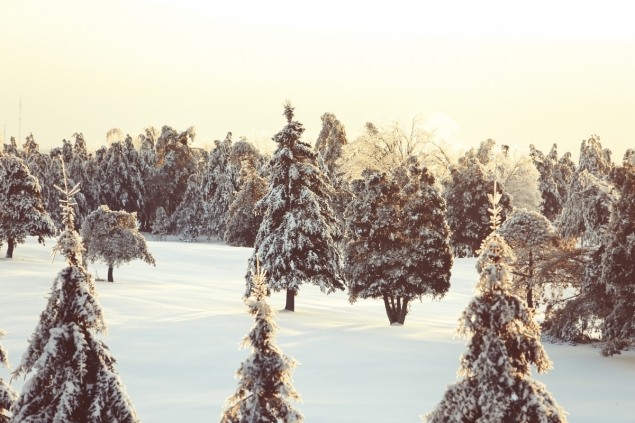 Optimized-2014-05-Life-of-Pix-free-stock-photo-quebec-snow-nature-635x423.jpg